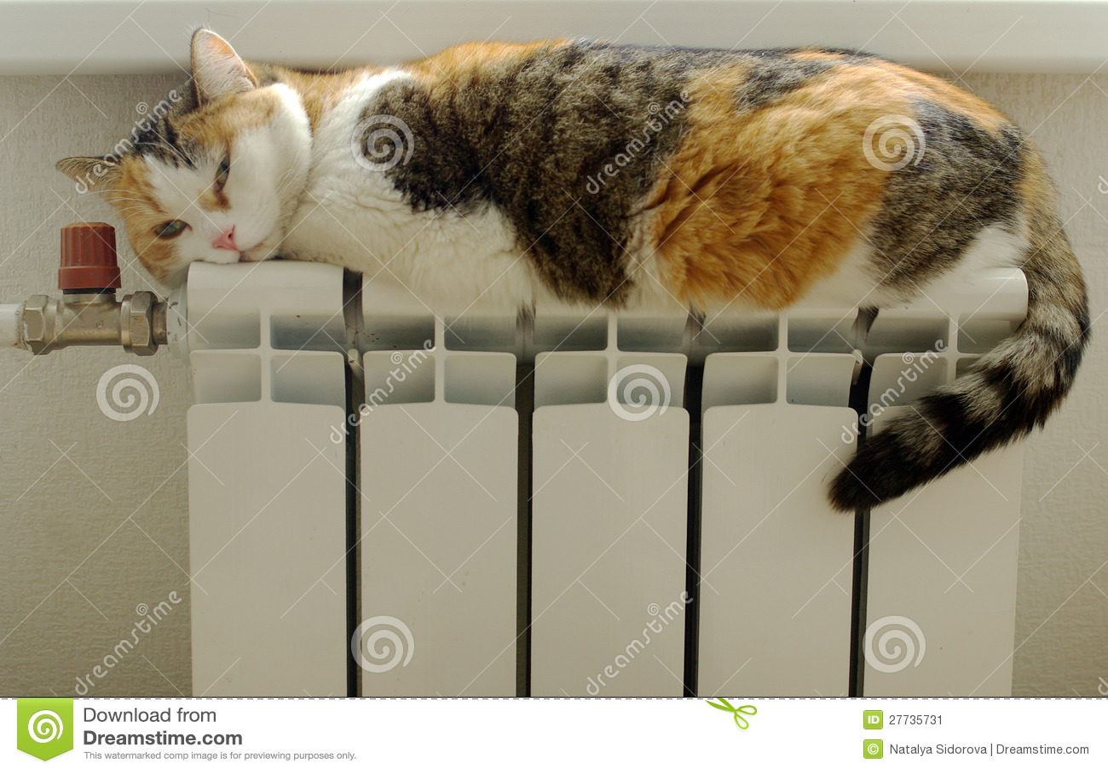 Katze, die im Kühler sich aalt