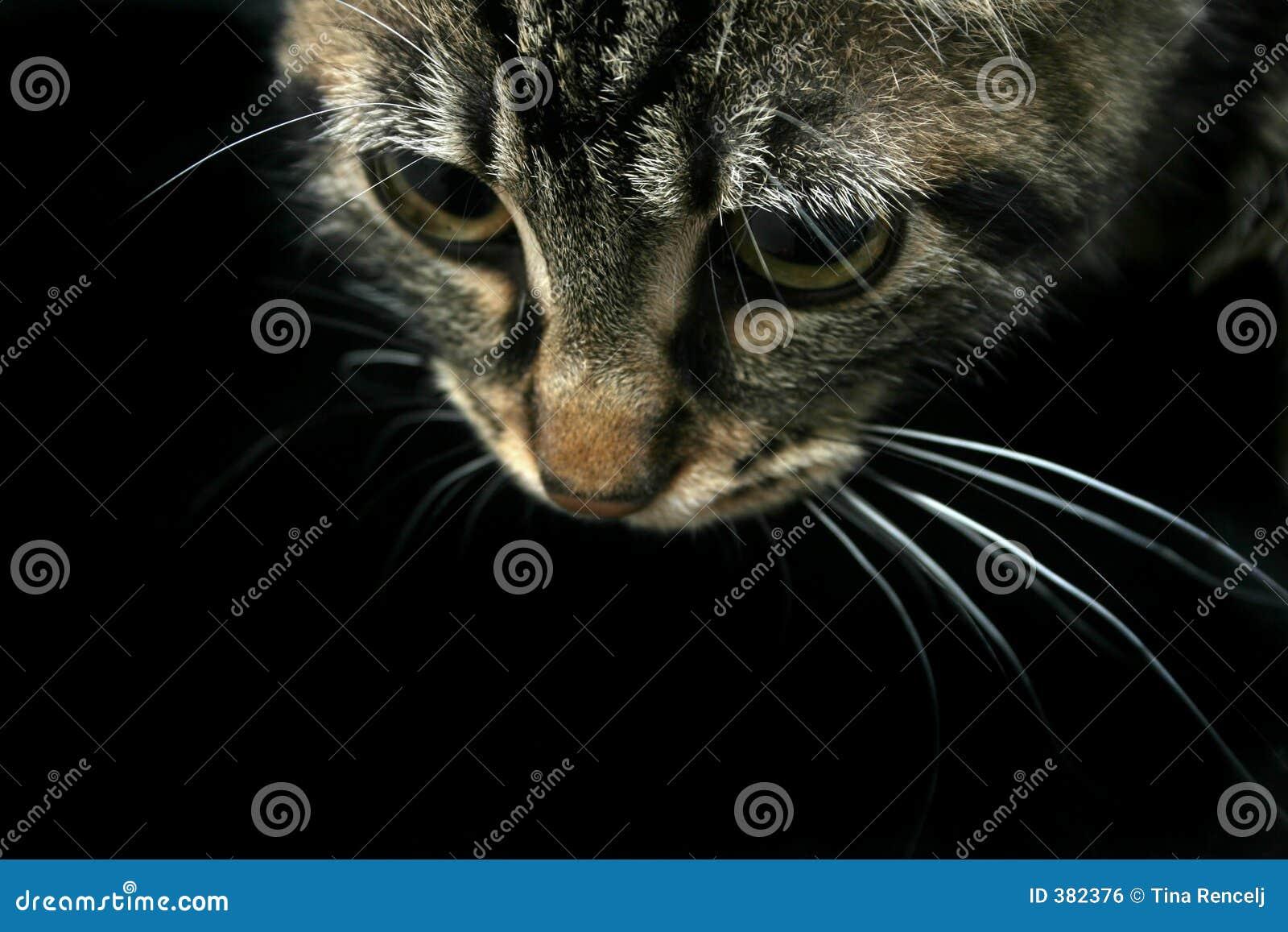 Katze, die unten schaut