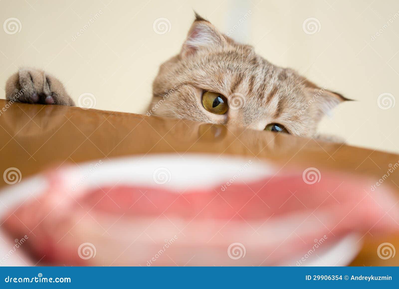 Katze, die versucht, rohes Fleisch vom Küchentisch zu stehlen