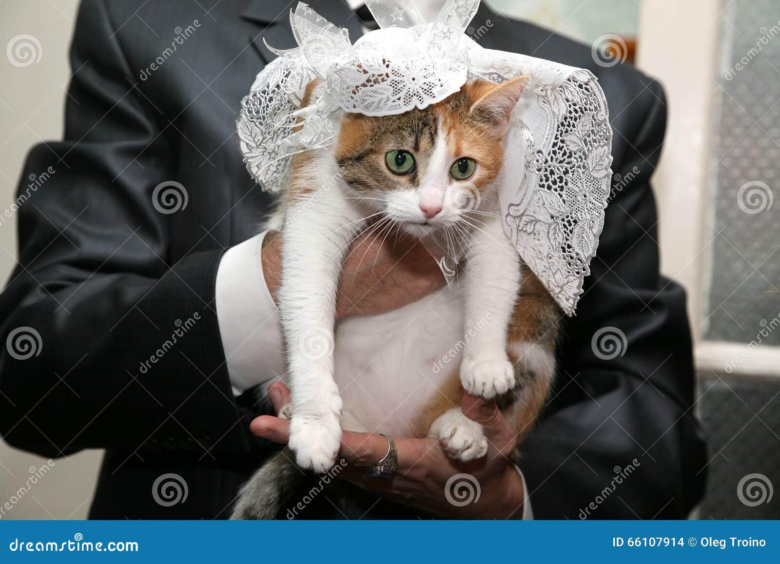 Katze In Einem Hochzeitskleid In Den H 228 Nden Der