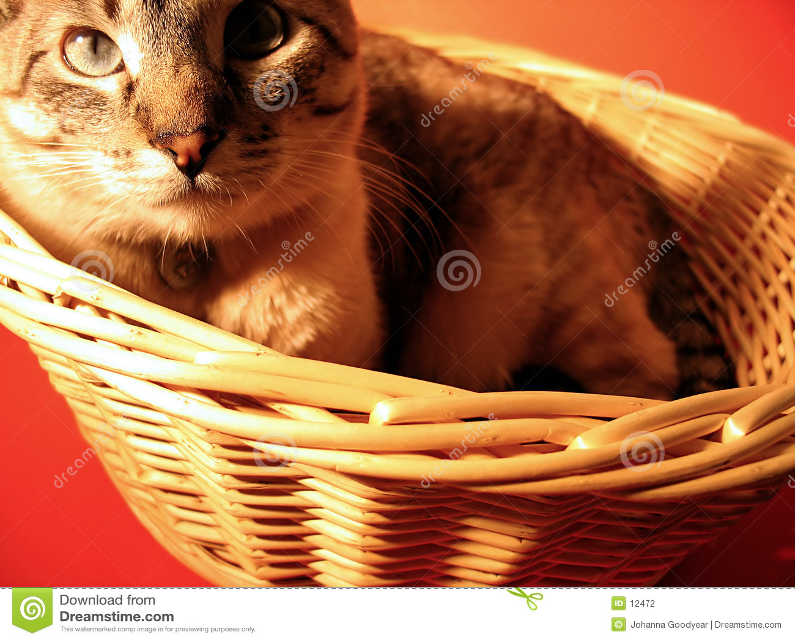 Katze in einem Korb