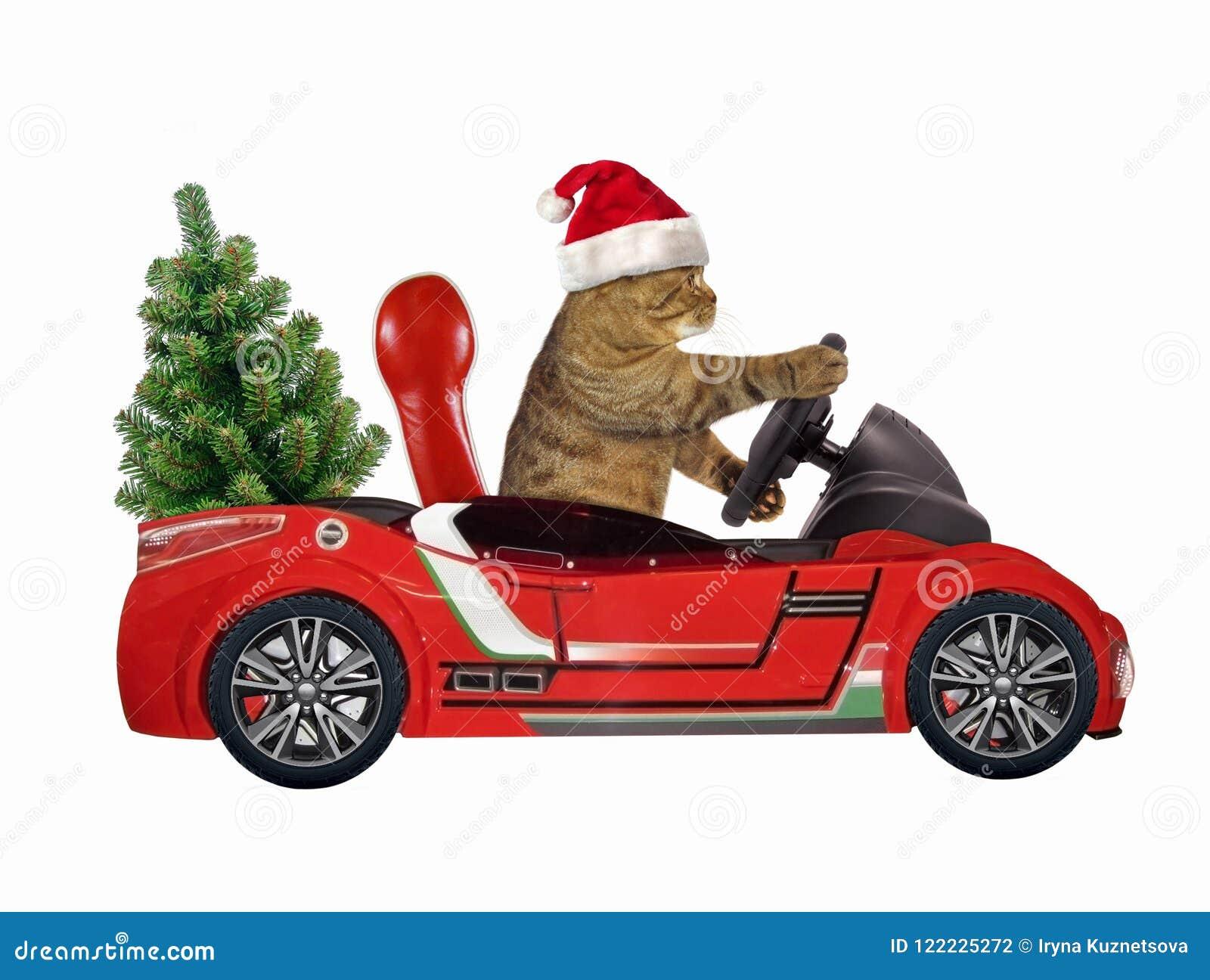 Katze in einem roten Auto 2