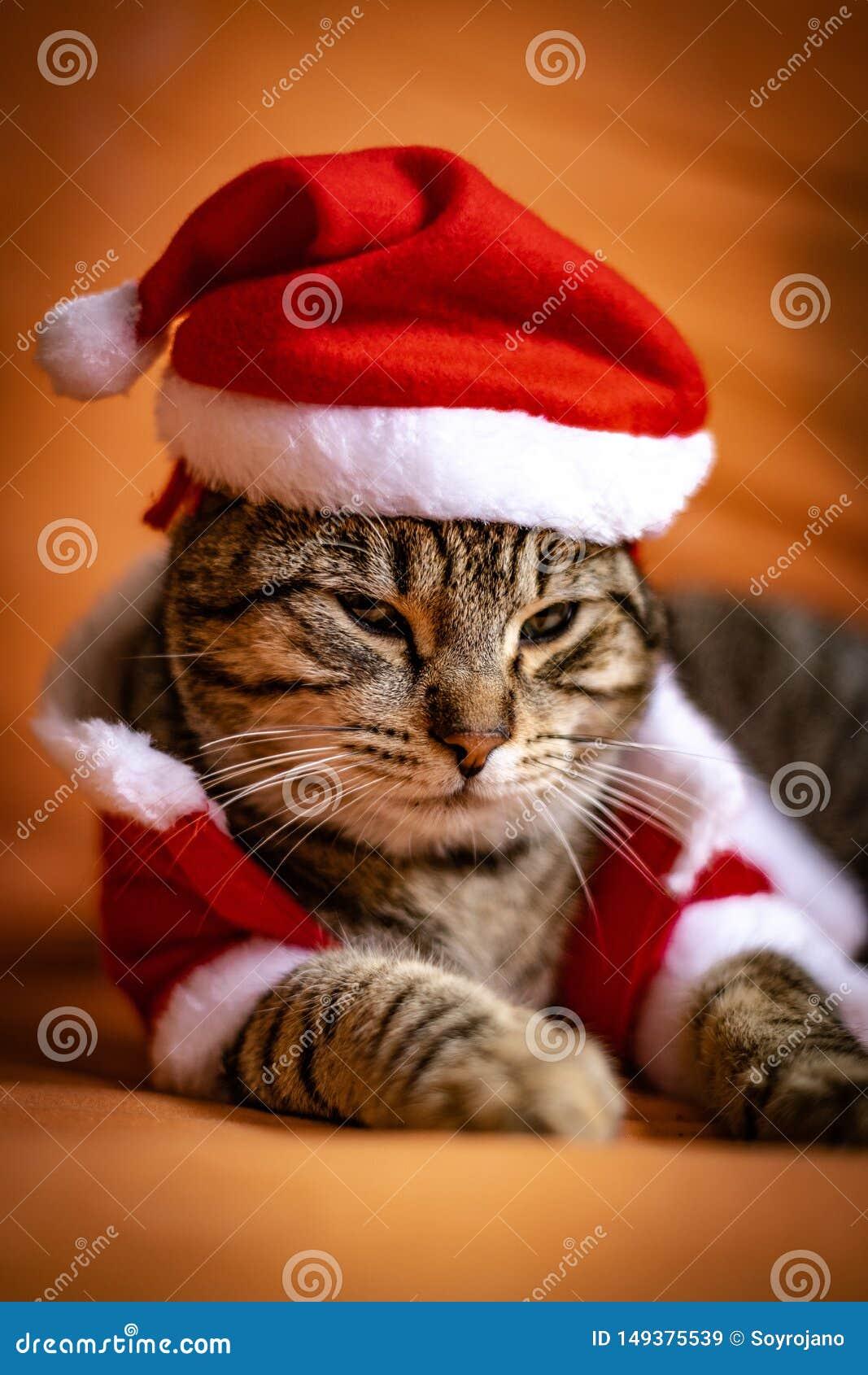 Katze gekleidet herauf als Weihnachtsmann