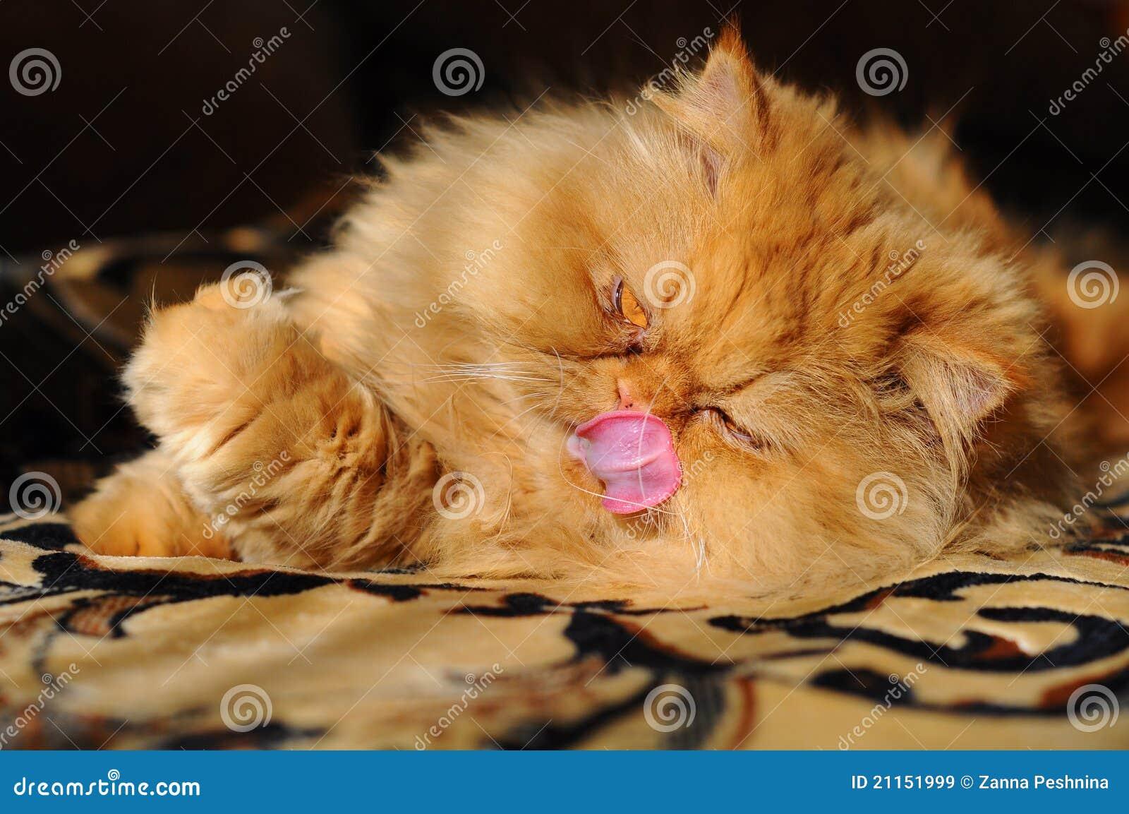 Katze geleckt