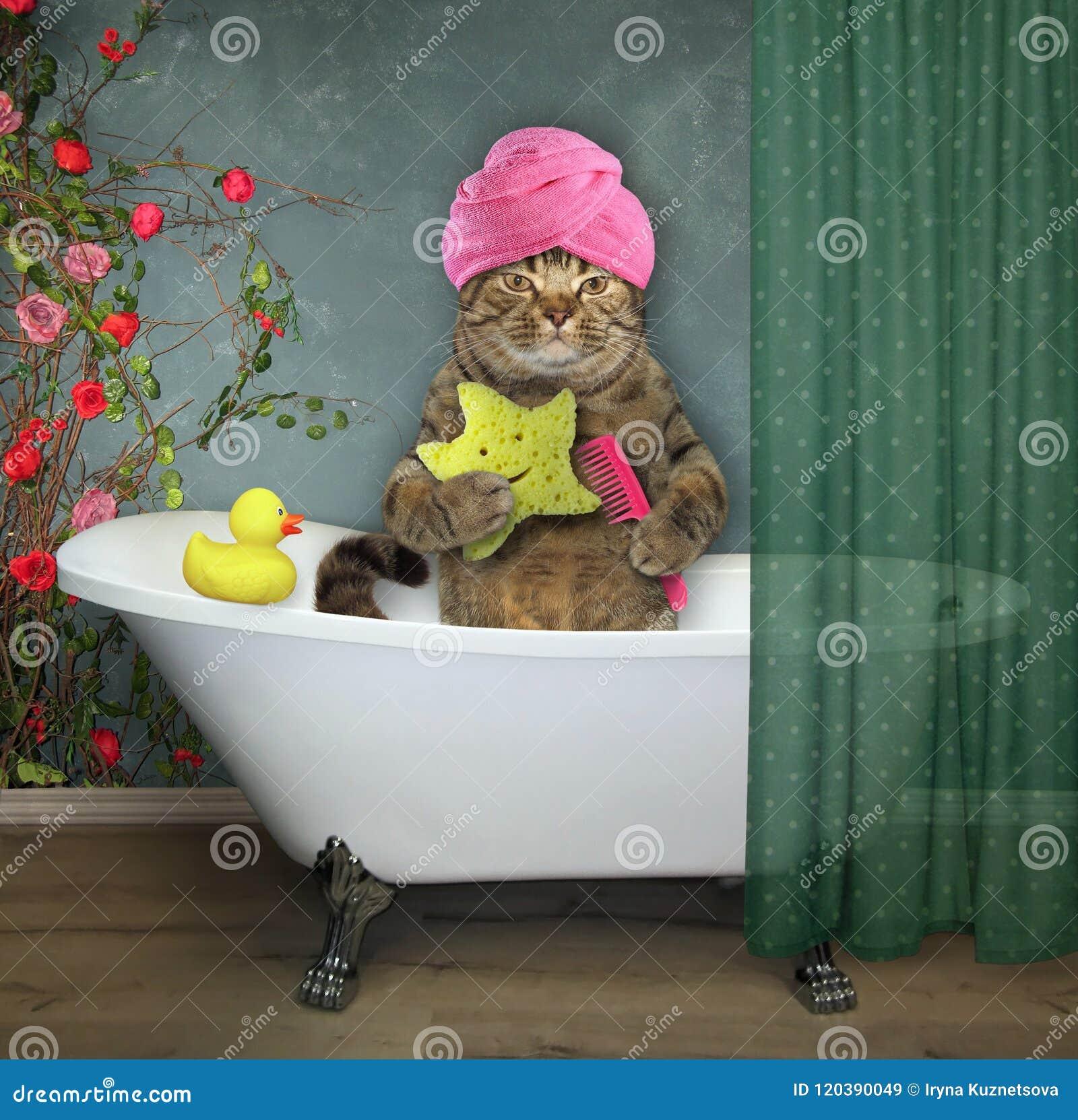 Katze im Badezimmer 2