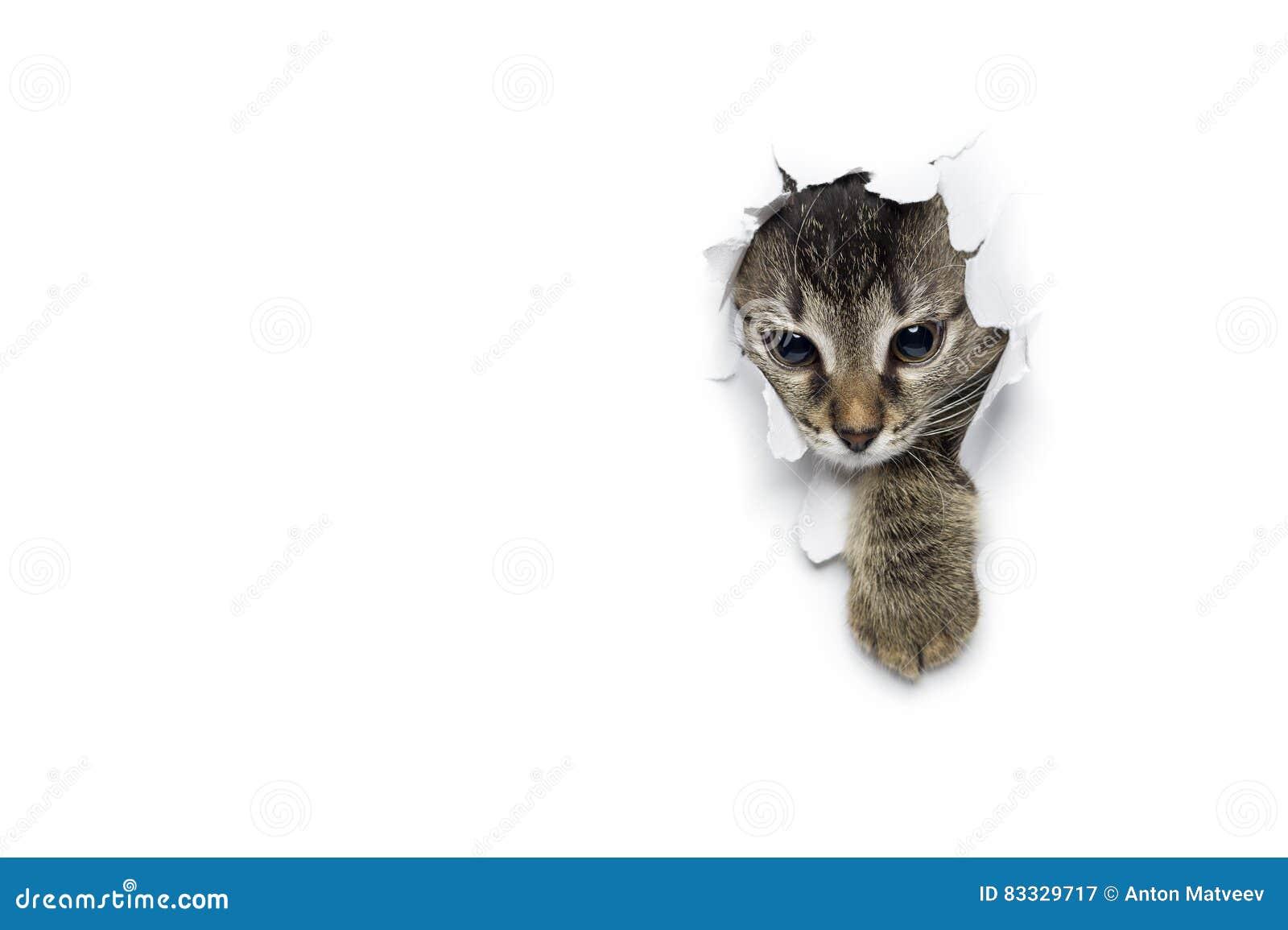 Katze im Loch des Papiers