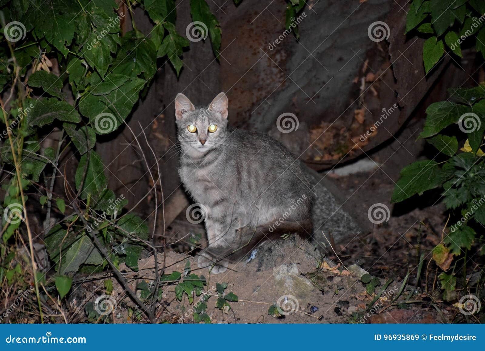 Katze im Park