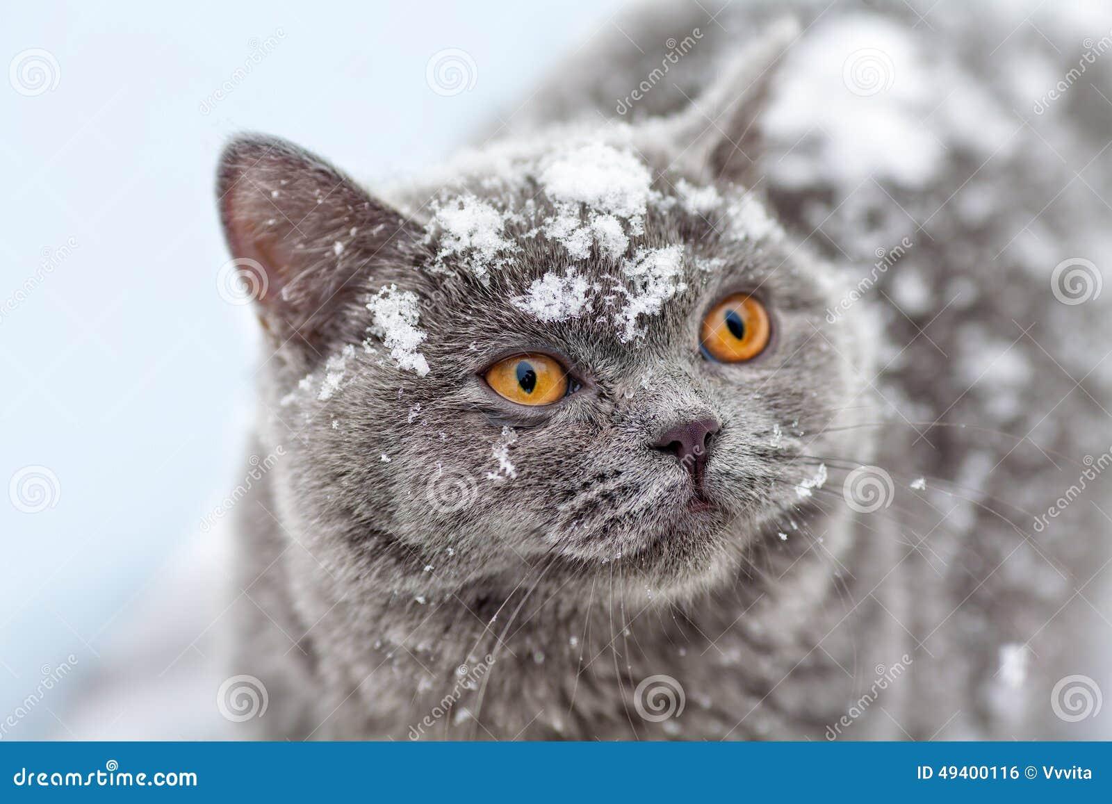 Download Katze im Schnee stockfoto. Bild von nett, abdeckung, fall - 49400116
