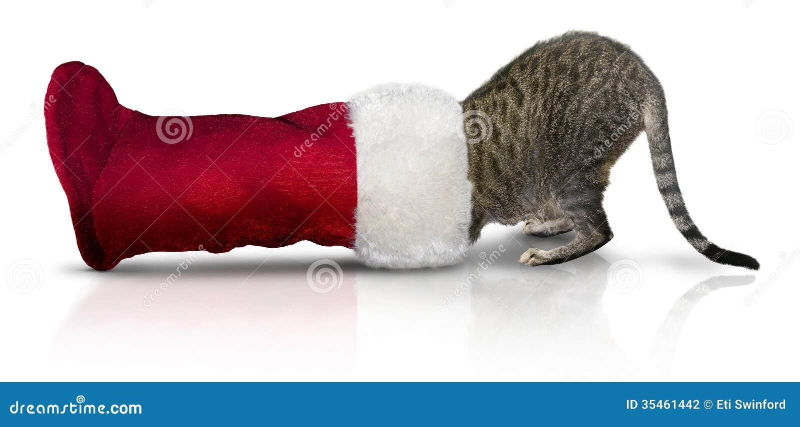 Katze im Weihnachtsstrumpf