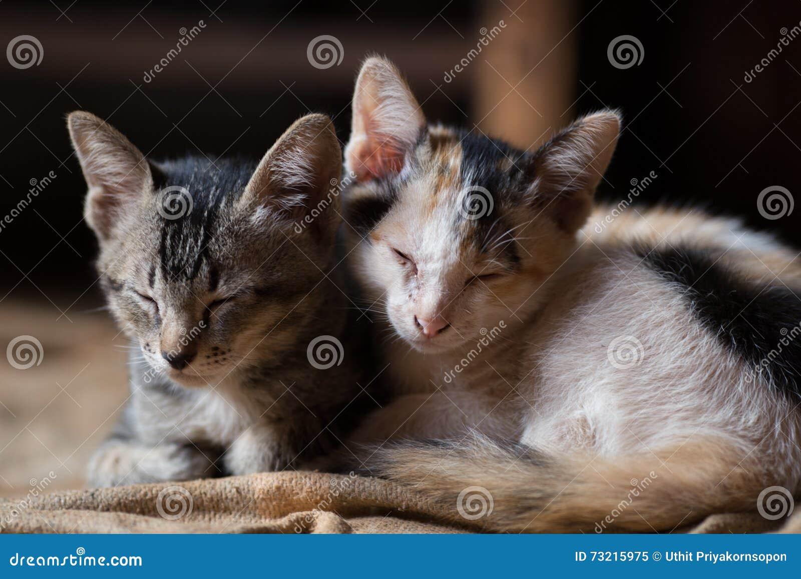 Katze, kleine Katzen A, paart Katzen