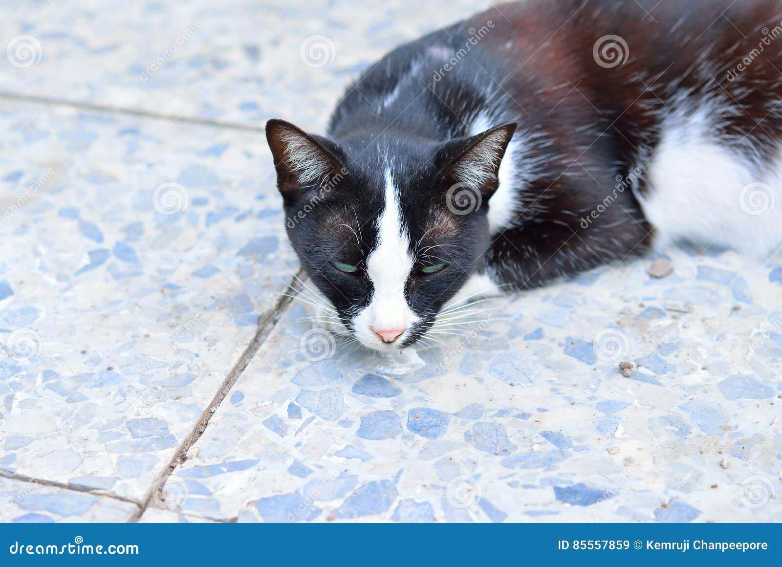 Katze legen sich auf dem Boden hin
