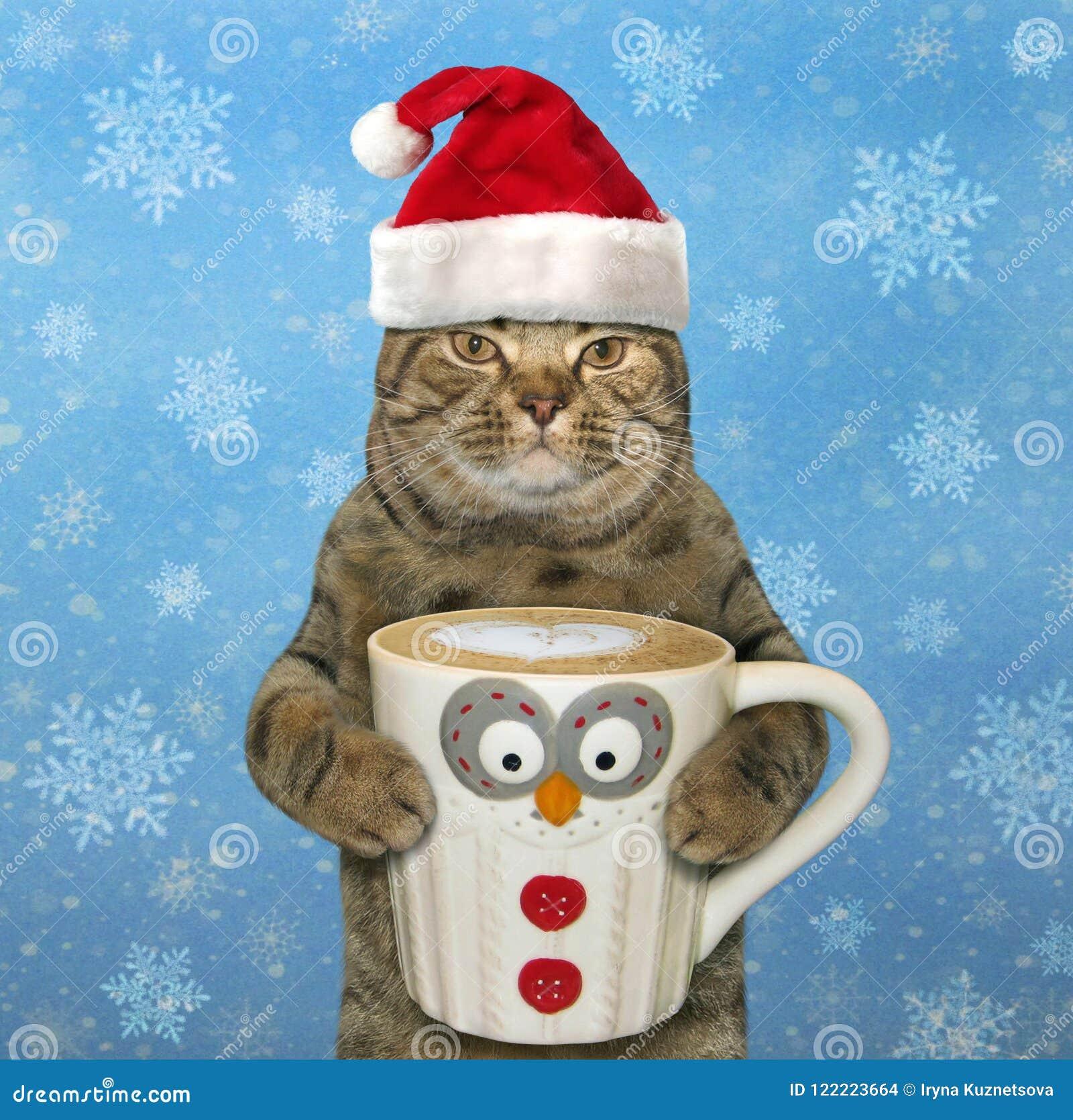 Katze mit einem großen Tasse Kaffee