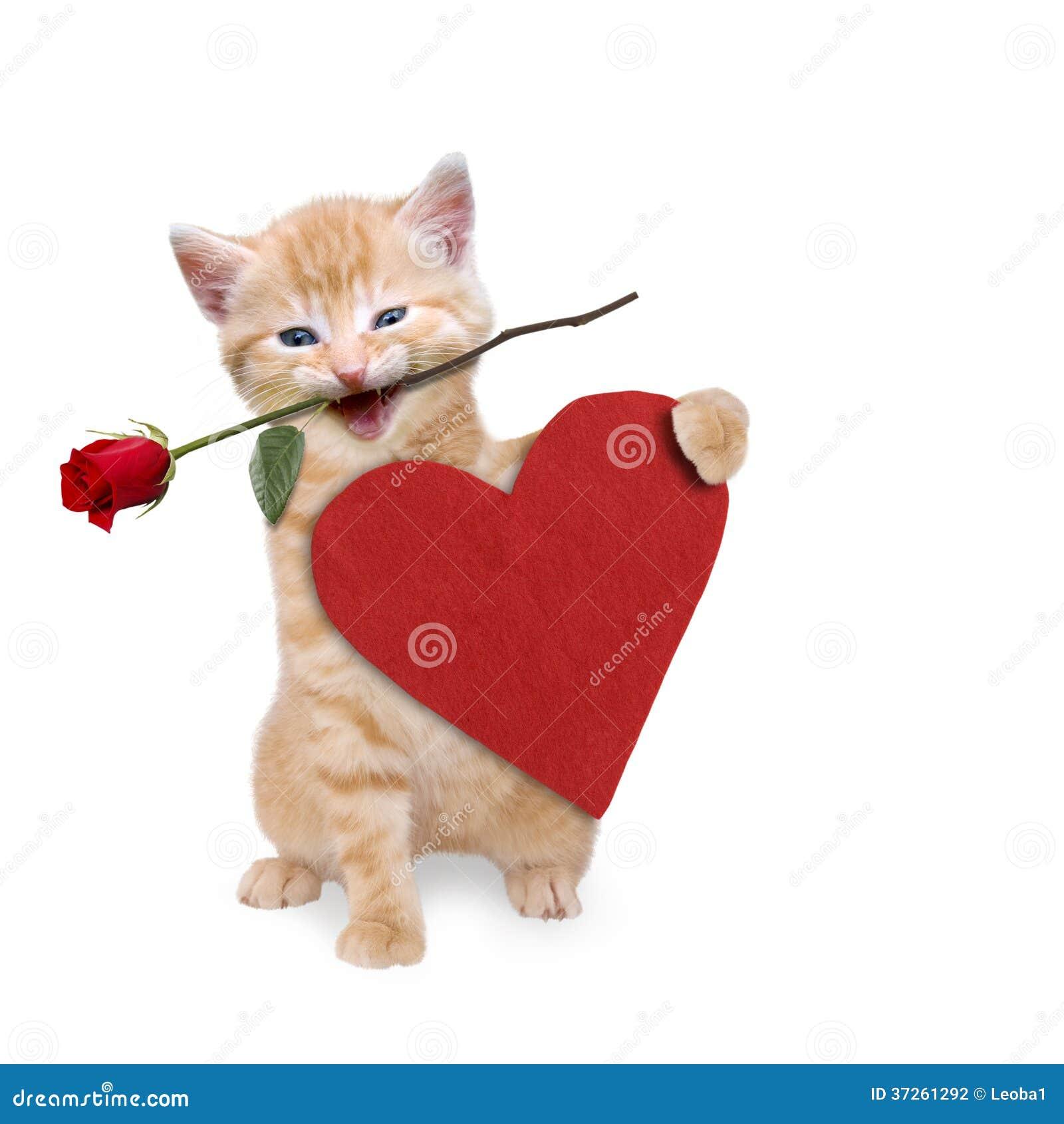Katze Mit Rose