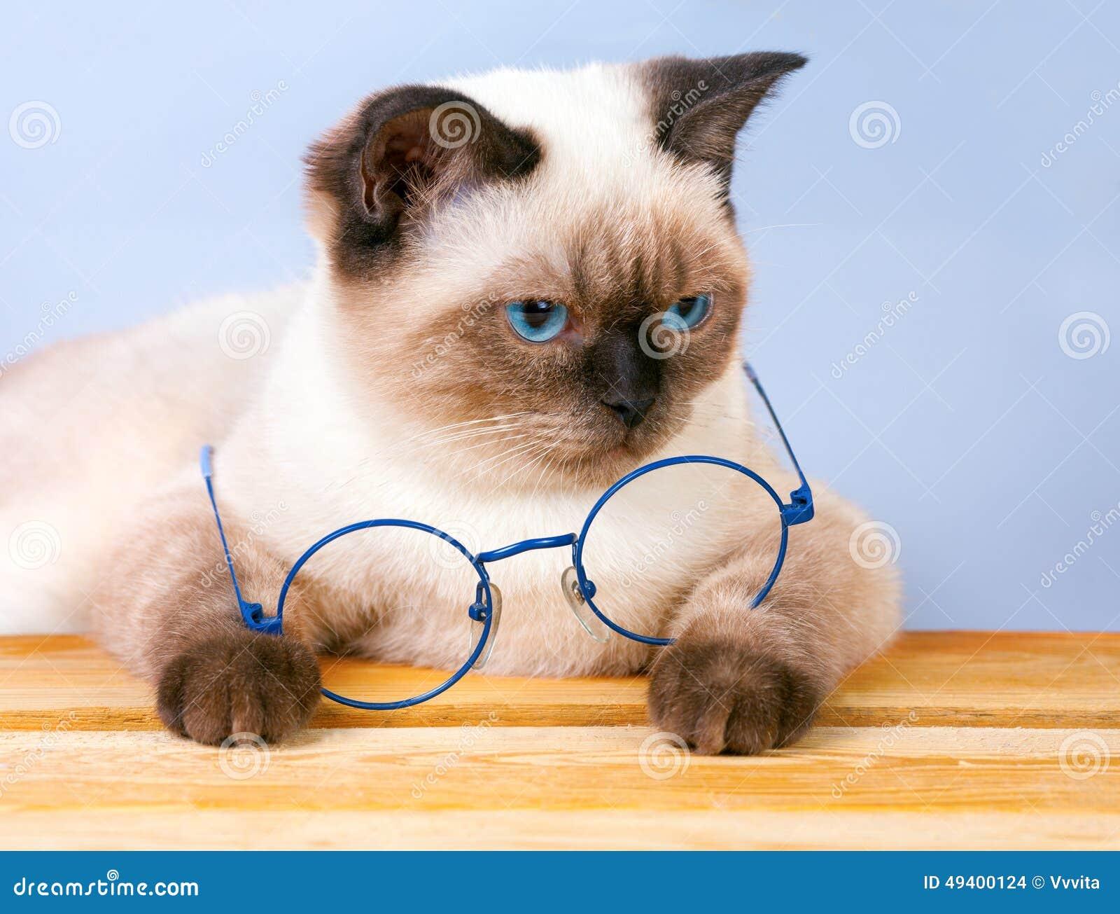 Download Katze mit Gläsern stockfoto. Bild von lügen, entzückend - 49400124