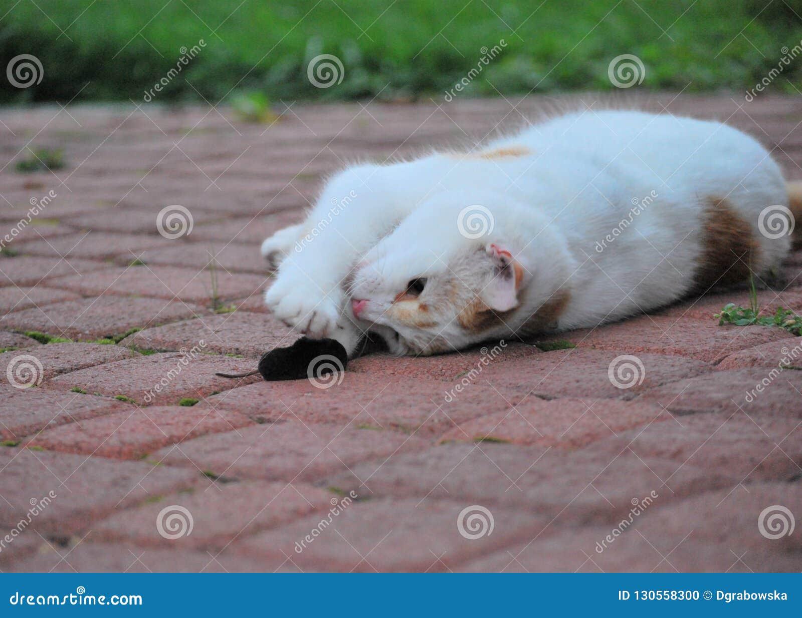Katze mit seiner gerechten catched Maus