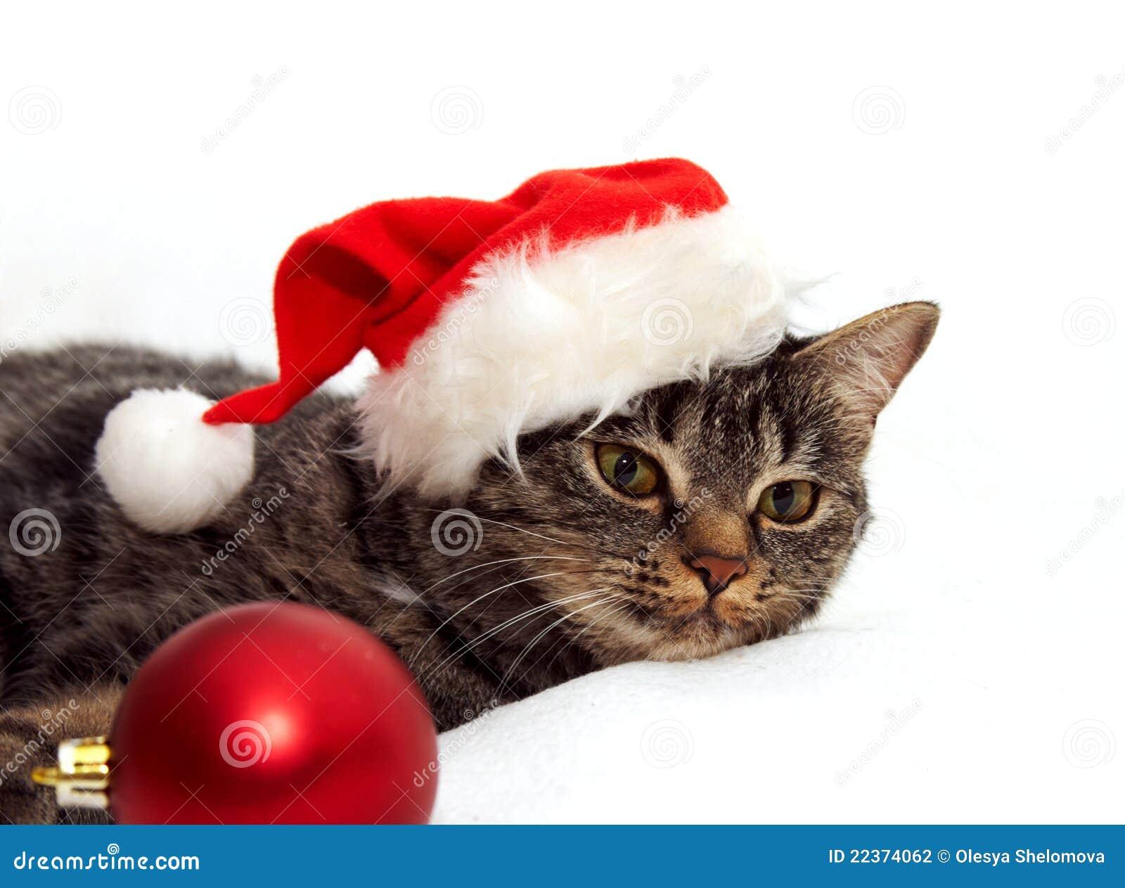 katze mit weihnachtskugel stockfoto bild von lustig 22374062. Black Bedroom Furniture Sets. Home Design Ideas