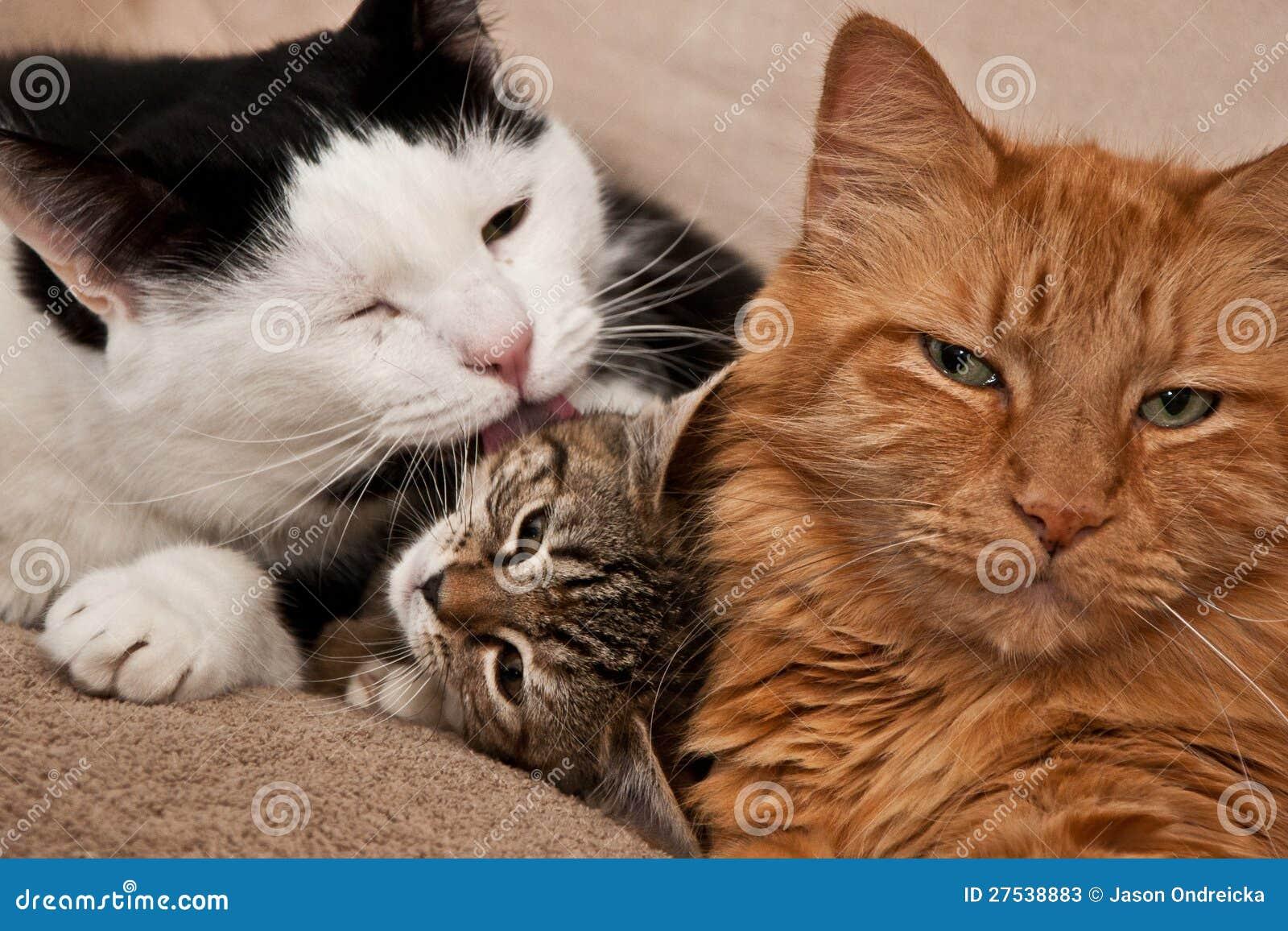 Katze-Pflegen