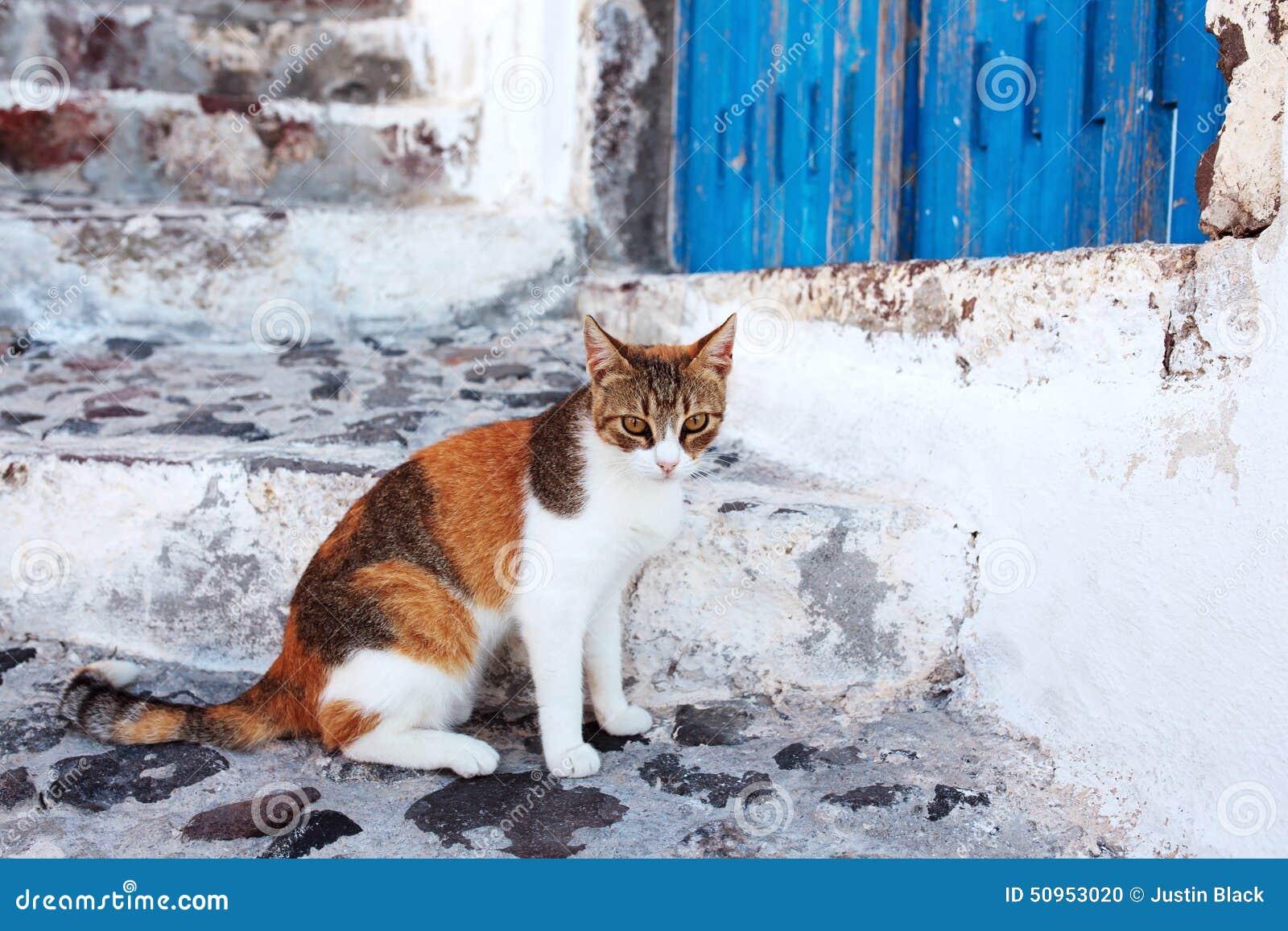 Katze in Santorini, Griechenland
