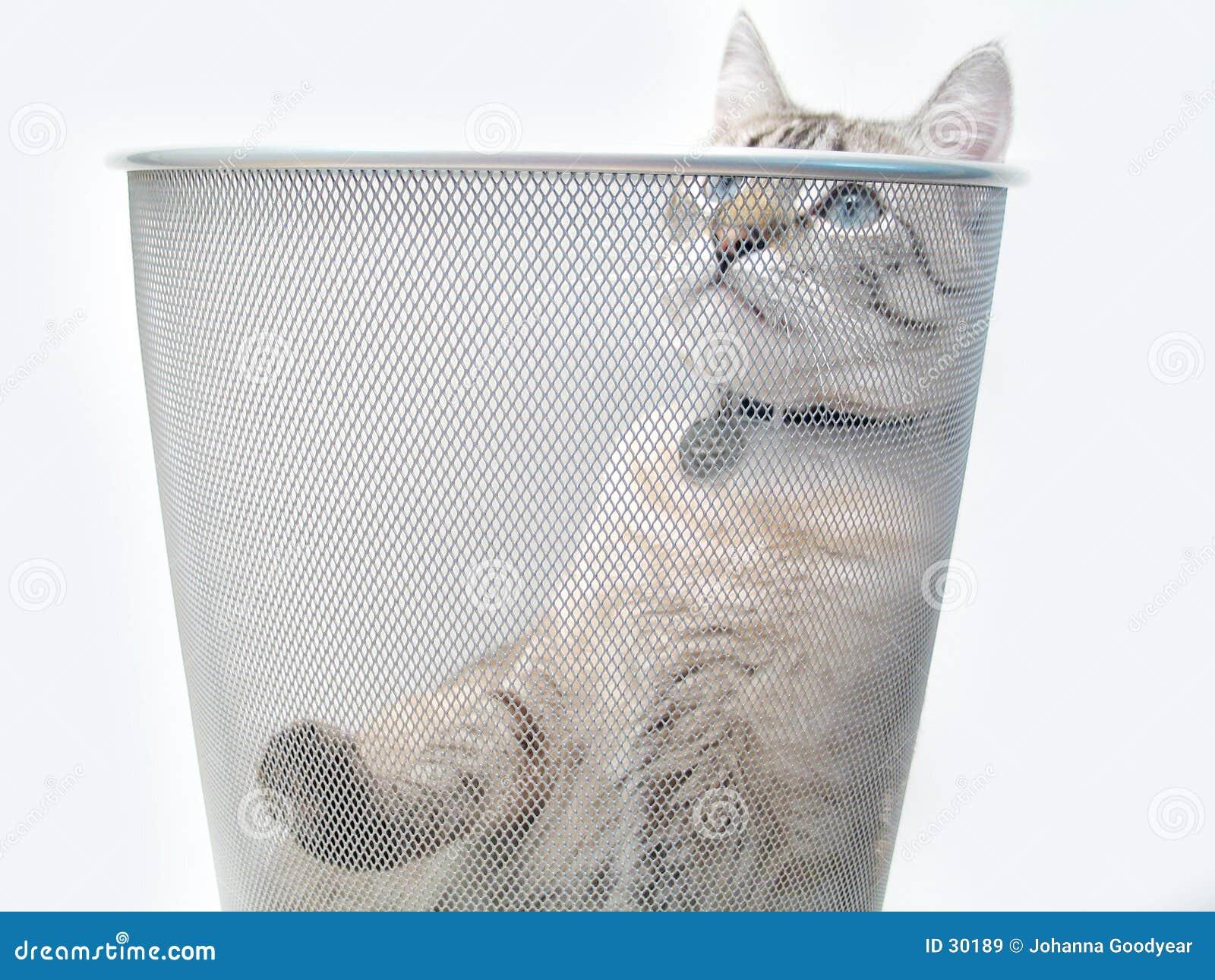 Katze-Spiel 1