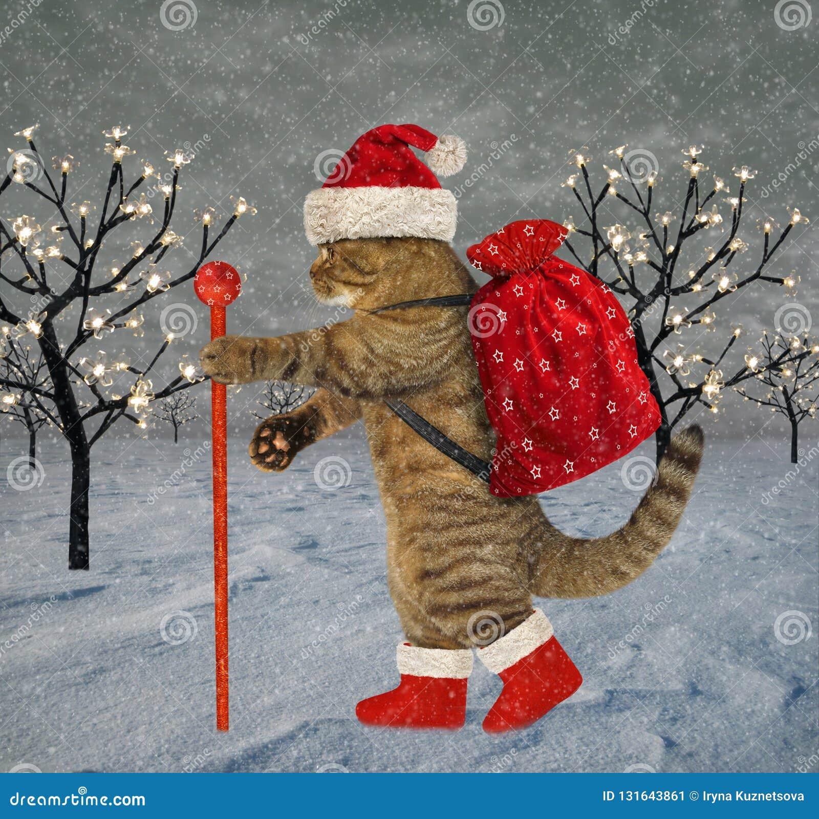 Katze trägt Weihnachtsgeschenke