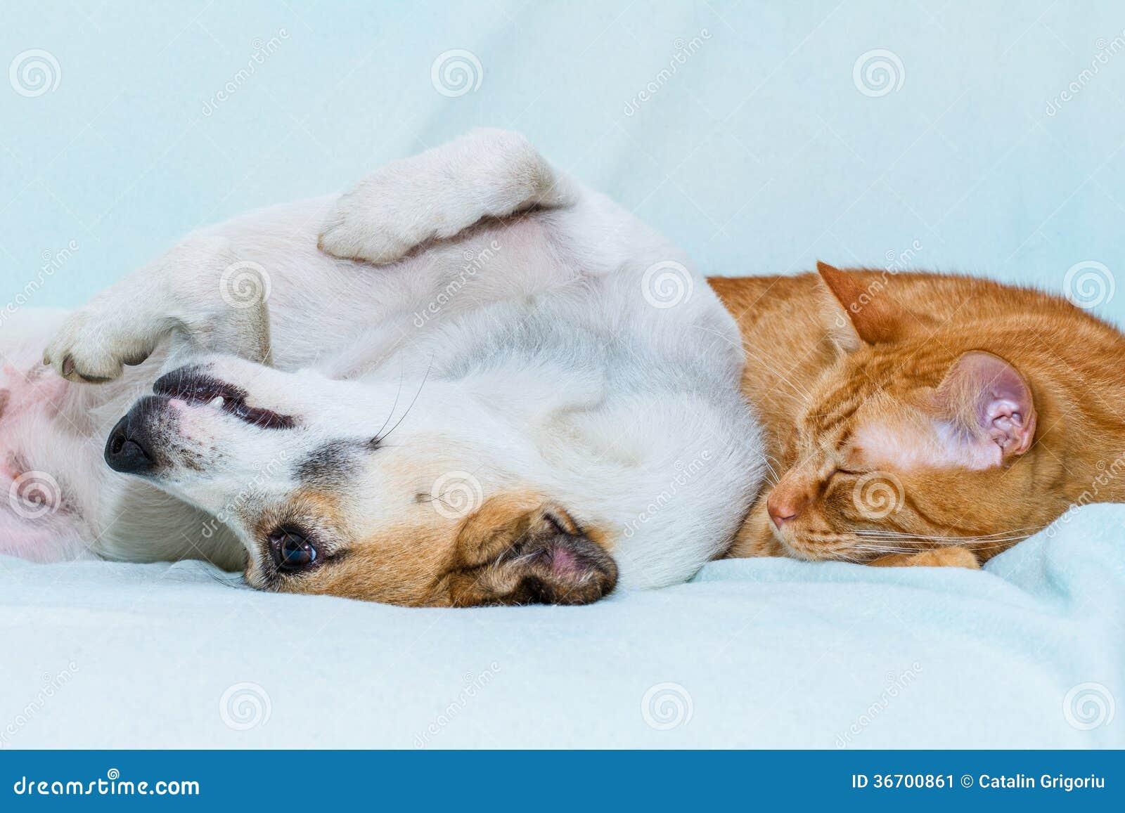 katze und hund die auf dem sofa schlafen stockbild bild 36700861. Black Bedroom Furniture Sets. Home Design Ideas