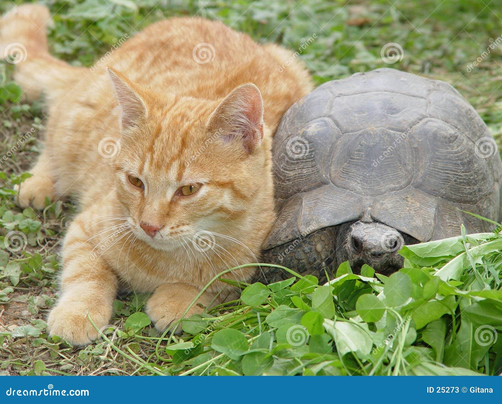 Katze und Schildkröte