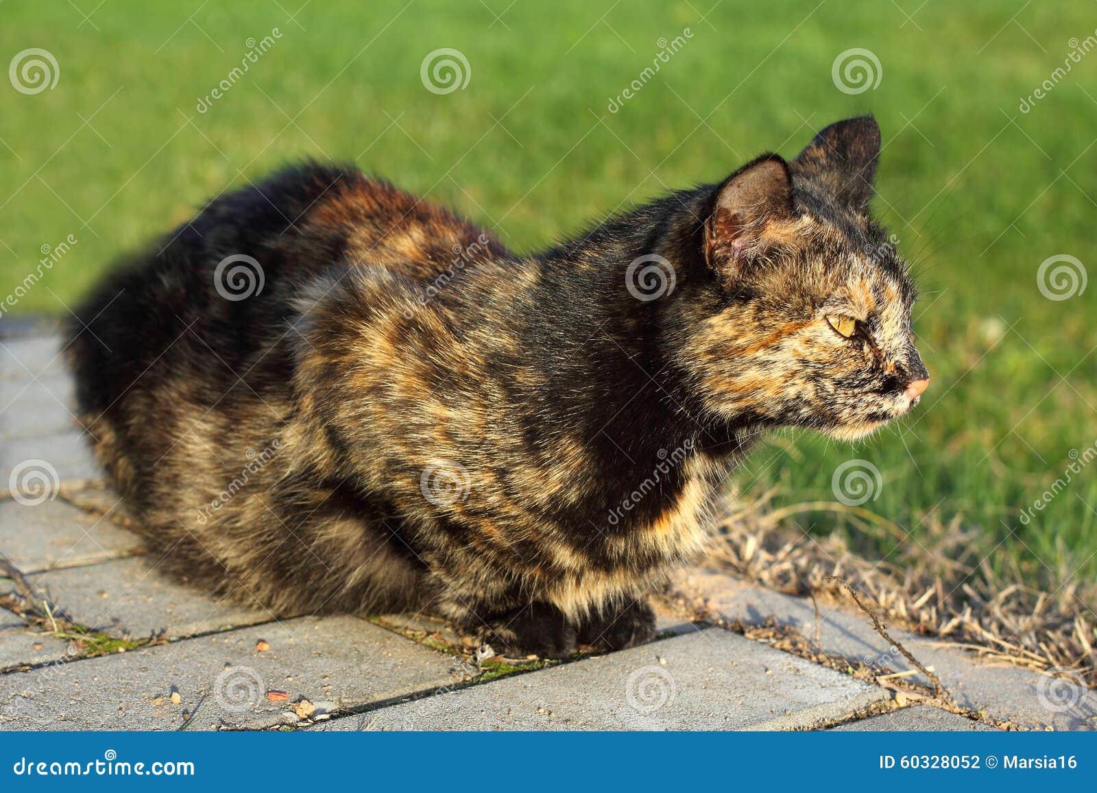 Katze vorsichtig