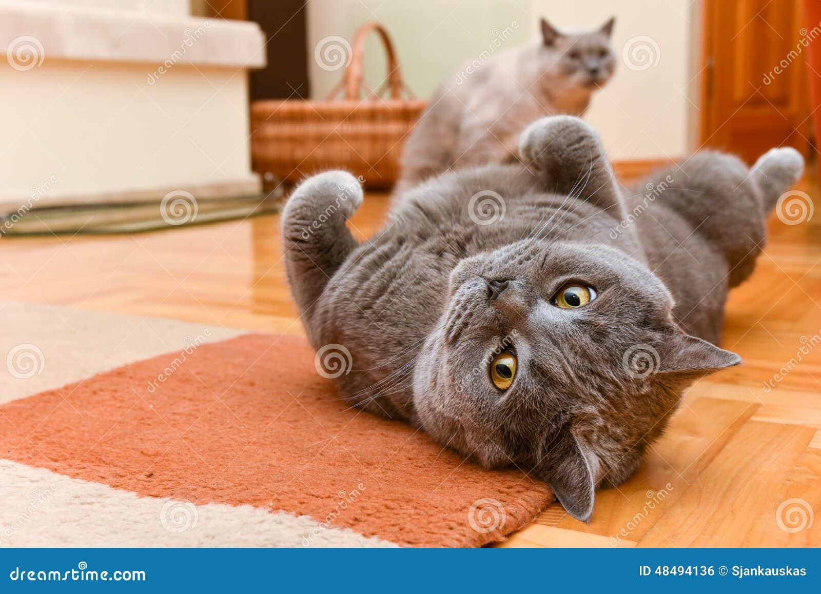 Katzen, die Spaß haben