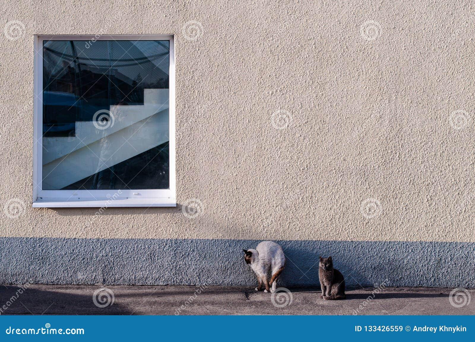 Katzen Mut und Furcht antonyme