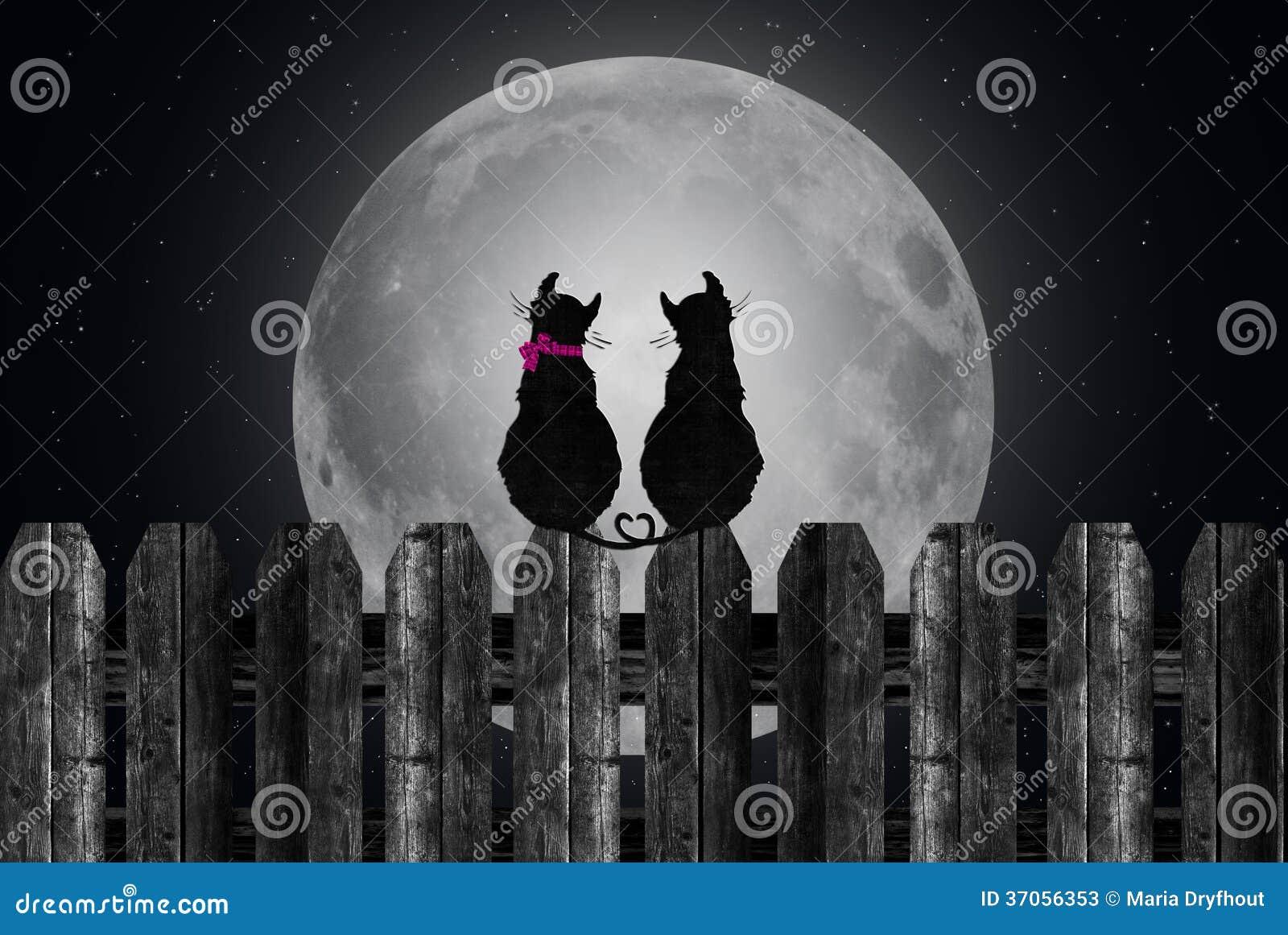Katzen Silhouettiert Auf Vollmond Stock Abbildung - Illustration von ...