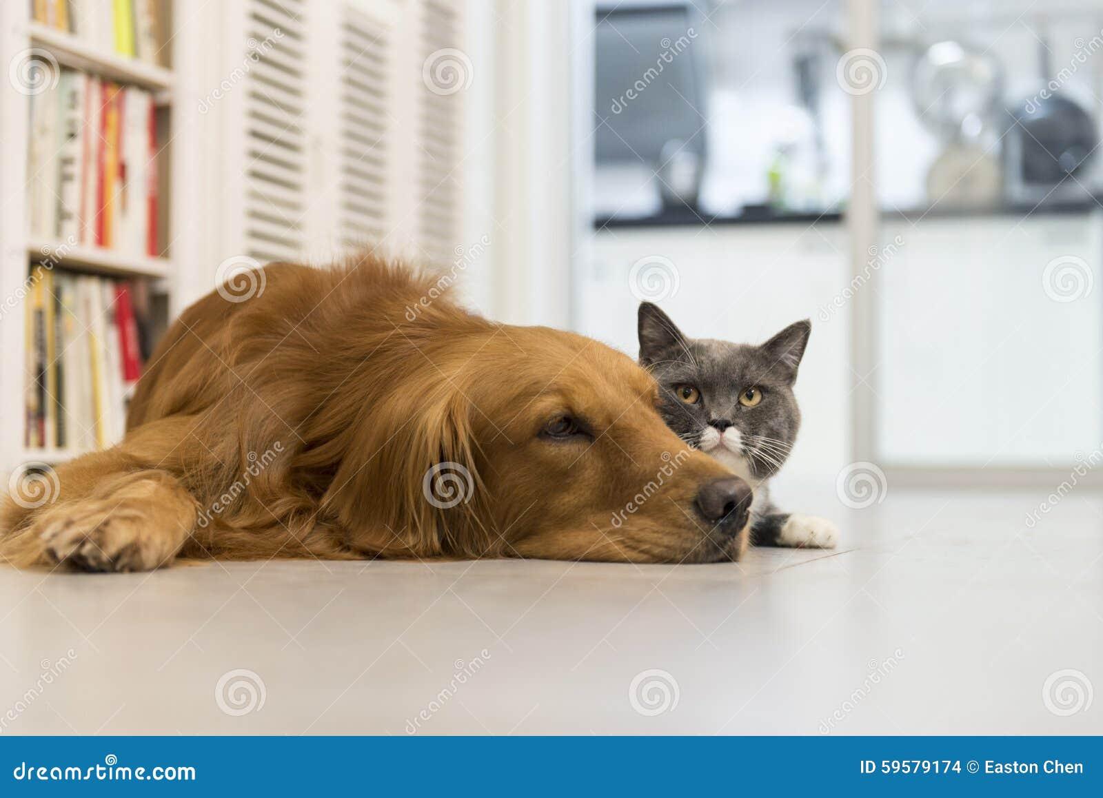 katzen und hunde stockfoto bild von haupt zusammen