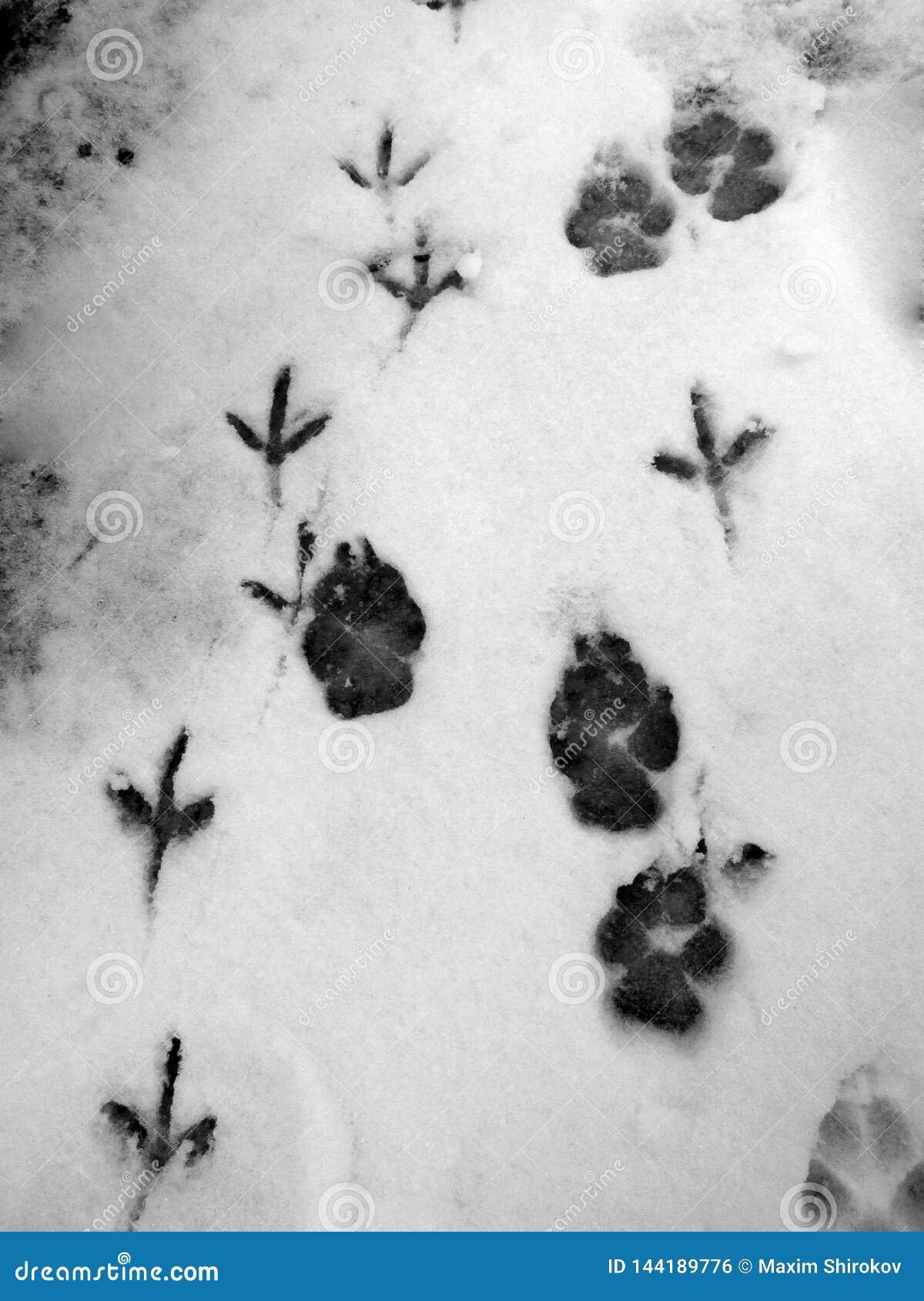 Katzen- und Vogelspuren im Schnee