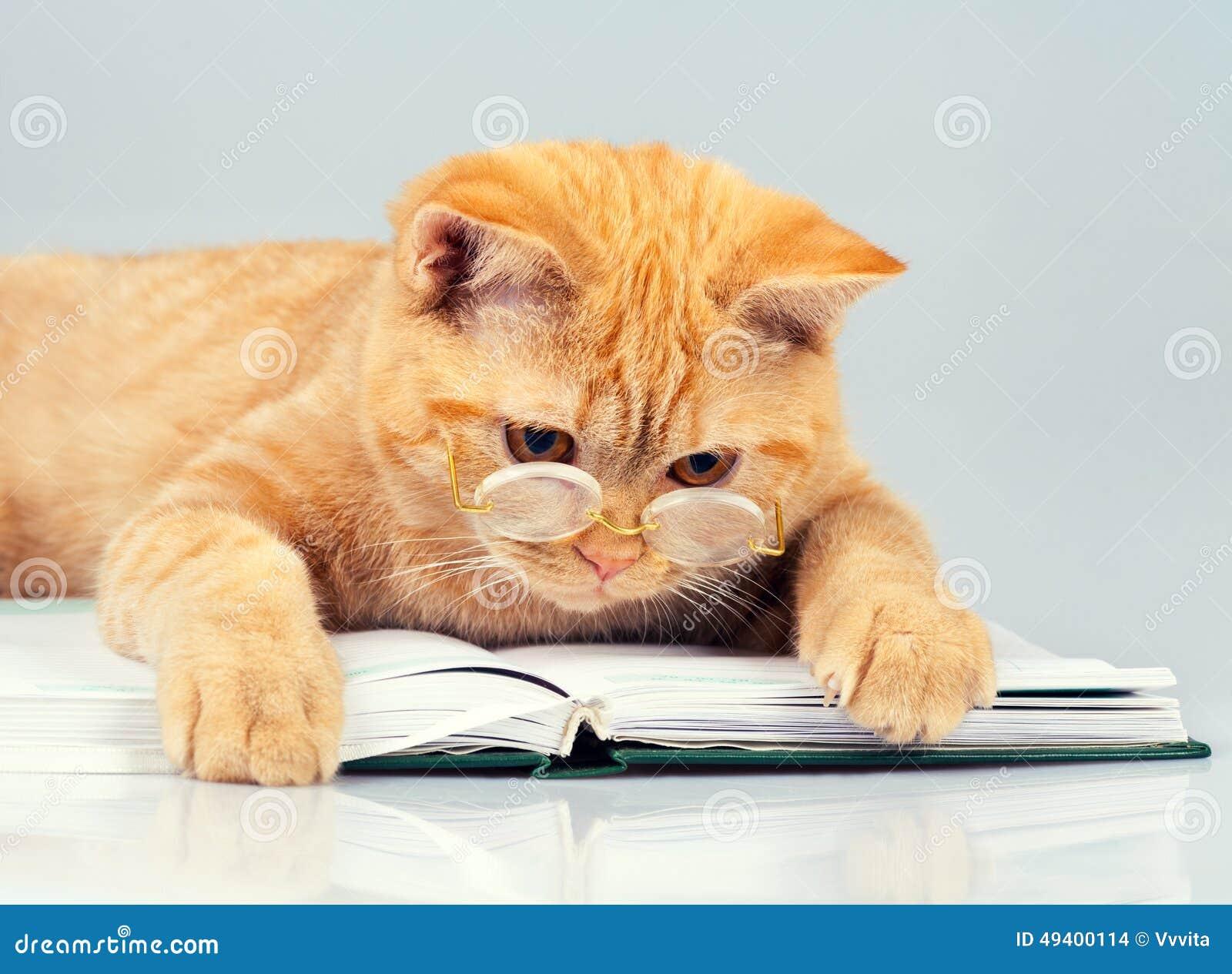 Download Katzenleser stockfoto. Bild von säugetier, katze, tatze - 49400114