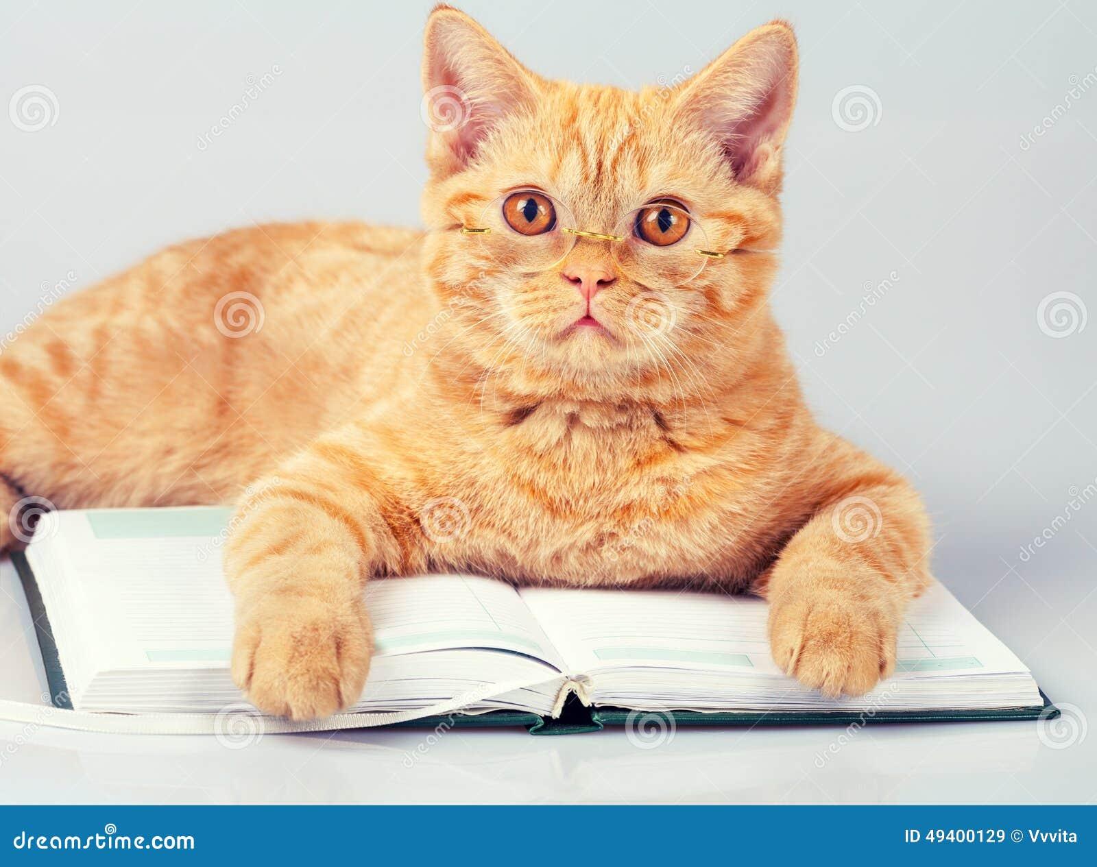 Download Katzenleser stockbild. Bild von traum, tier, gläser, katzenartig - 49400129