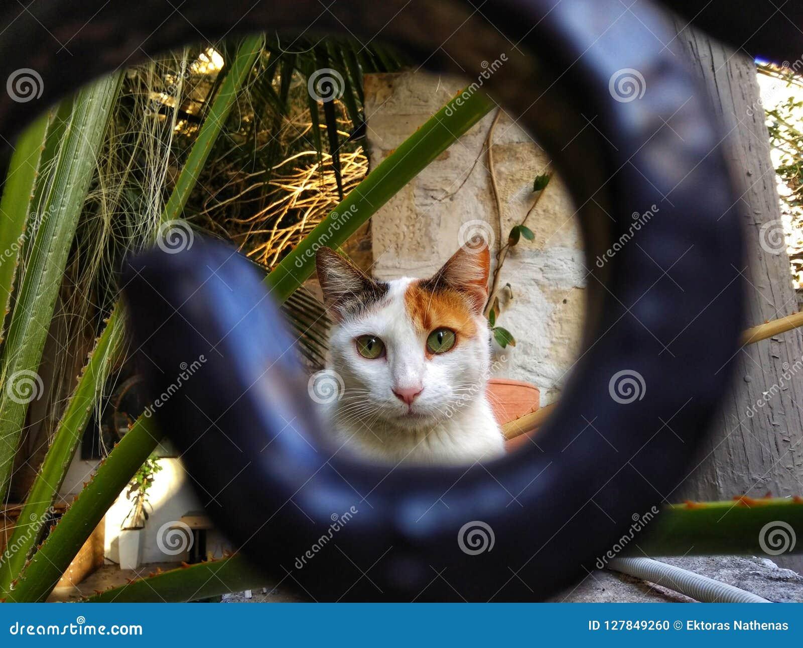 Katzenporträt in den Rahmen