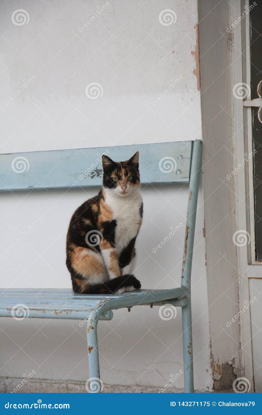 Katzenstellung auf dem Stuhl außerhalb des Hauses