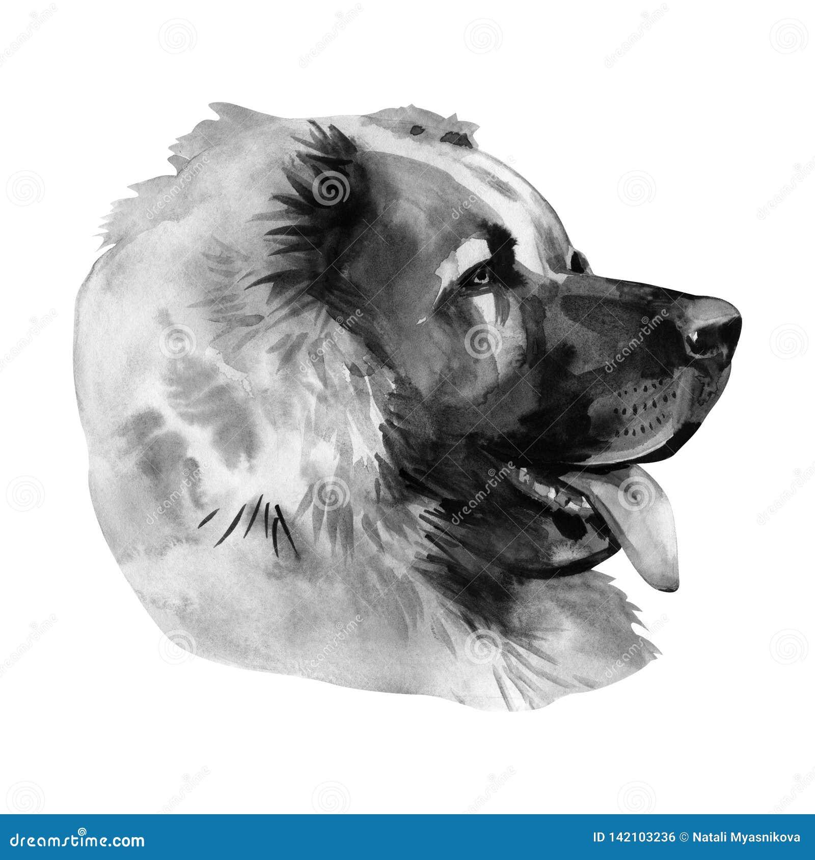 Kaukasischer Schaferhund Portrat Malendes Nasses Aquarell Auf Papier Naive Kunst Abstrakte Kunst Zeichnungsaquarell Auf Papier Stockfoto Bild Von Papier Abstrakte 142103236
