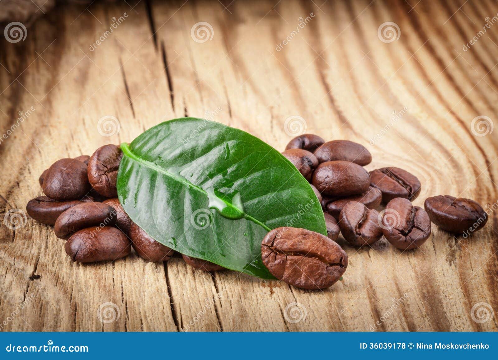 Kaw adra i zielony liść