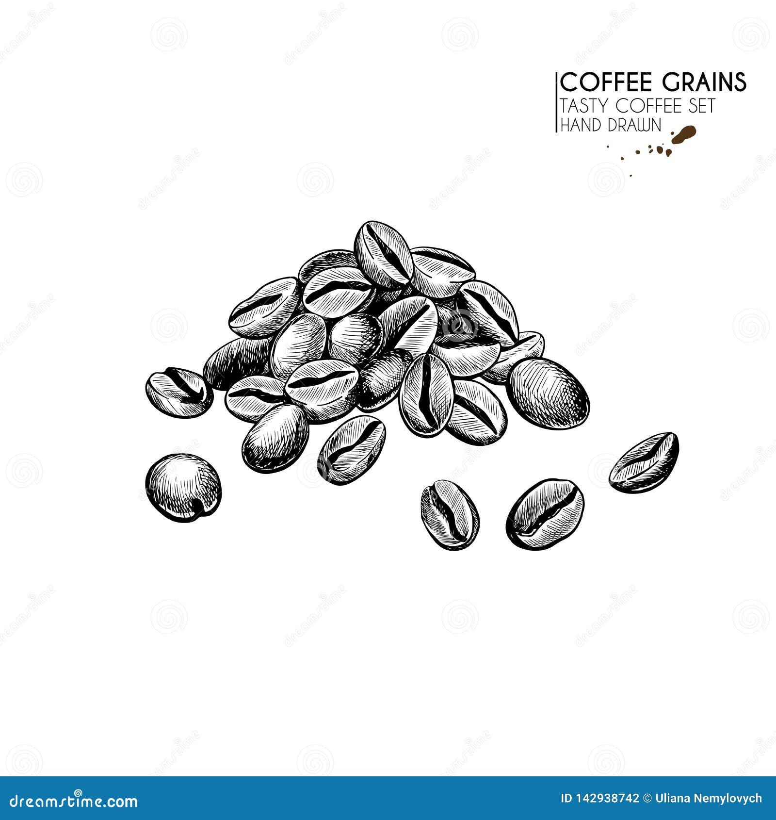 Kawa biel odosobniony ustalony Ręka rysujący kawowej fasoli stos Świeżo piec lub surowy zbożowy rozsypisko Wektor graweruj?ca iko