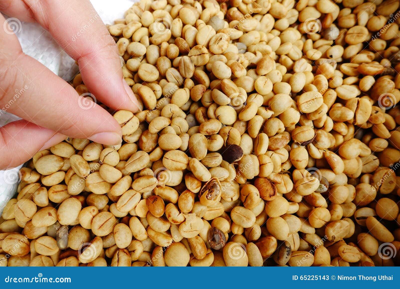 Kawowe fasole dla tło