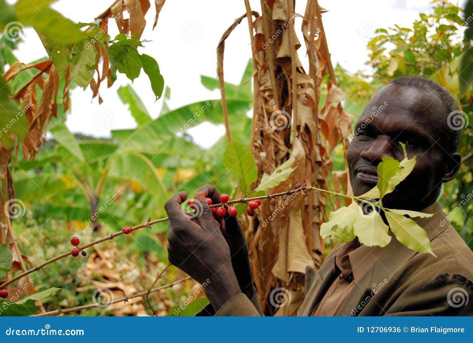 Kawowy rolnik