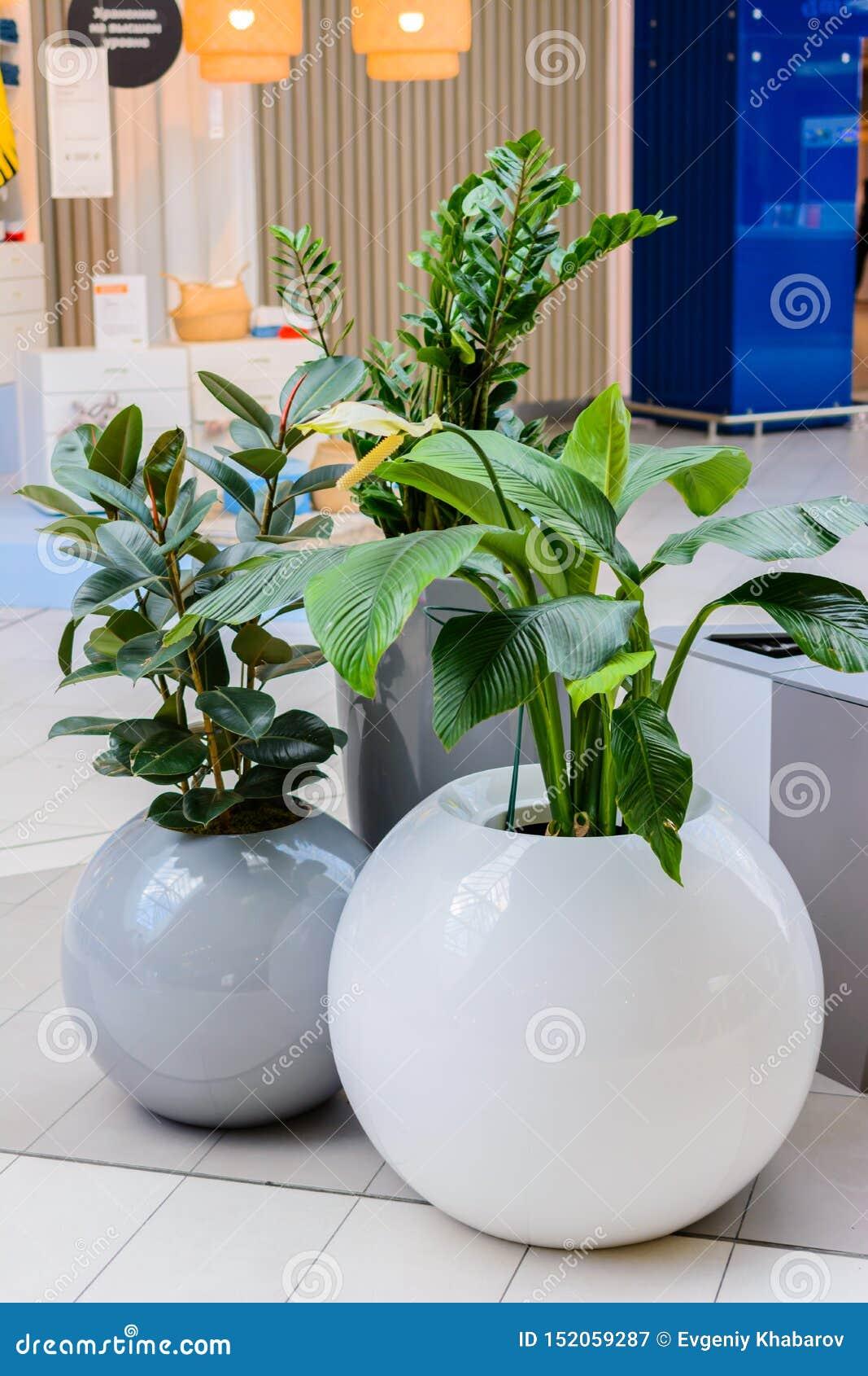 Kazan/Rússia - 10 de maio de 2019: Potenciômetros interessantes e incomuns para plantas com formas arredondadas