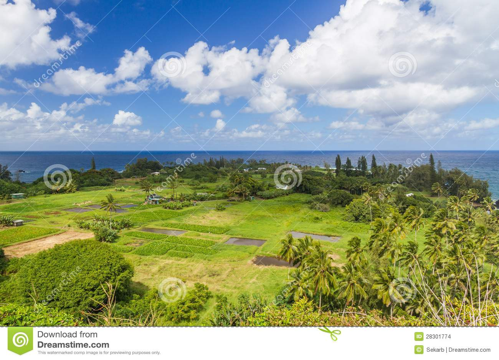 Keanae σε Maui με Taro τα πεδία