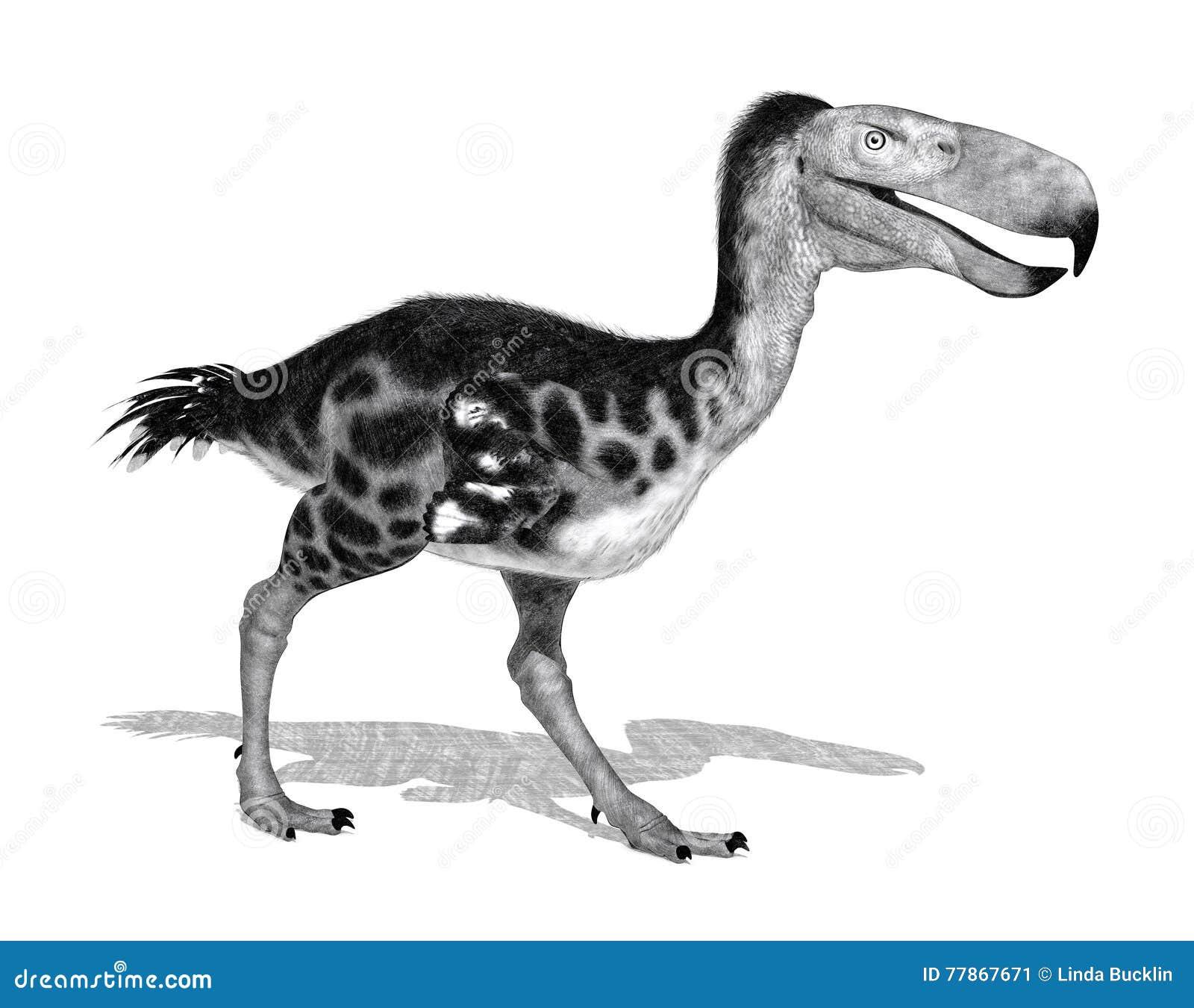 Kelenken - Wielki Prehistoryczny ptak