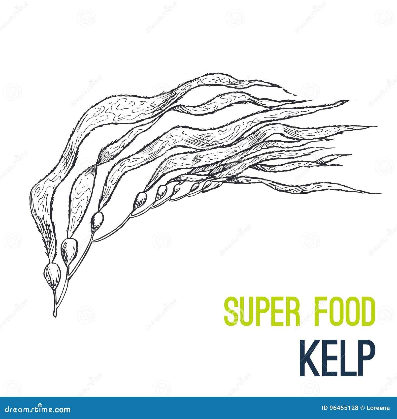 Kelp Supergezeichneter Skizzenvektor des Lebensmittels Hand