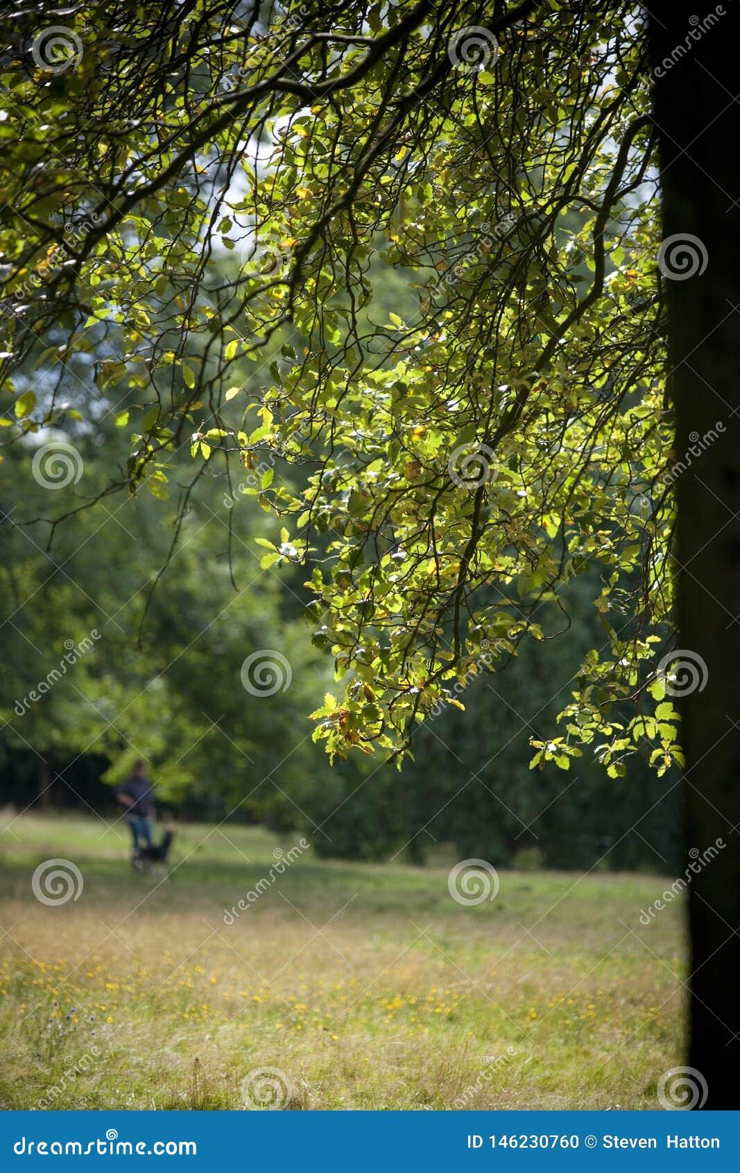 Kelvingrove Parkuje, Glasgow, Szkocja, Zjednoczone Kr?lestwo, Wrzesie? 2013, parkland i drzewa w Kelvingrove parku,