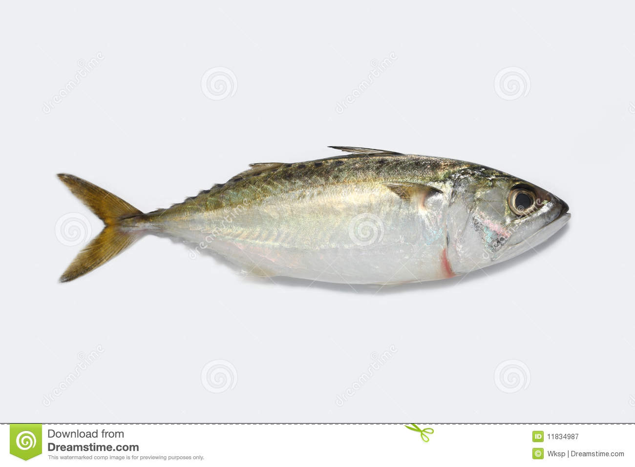 Kembong fish stock image image of fresh tail kembong for Image of fish