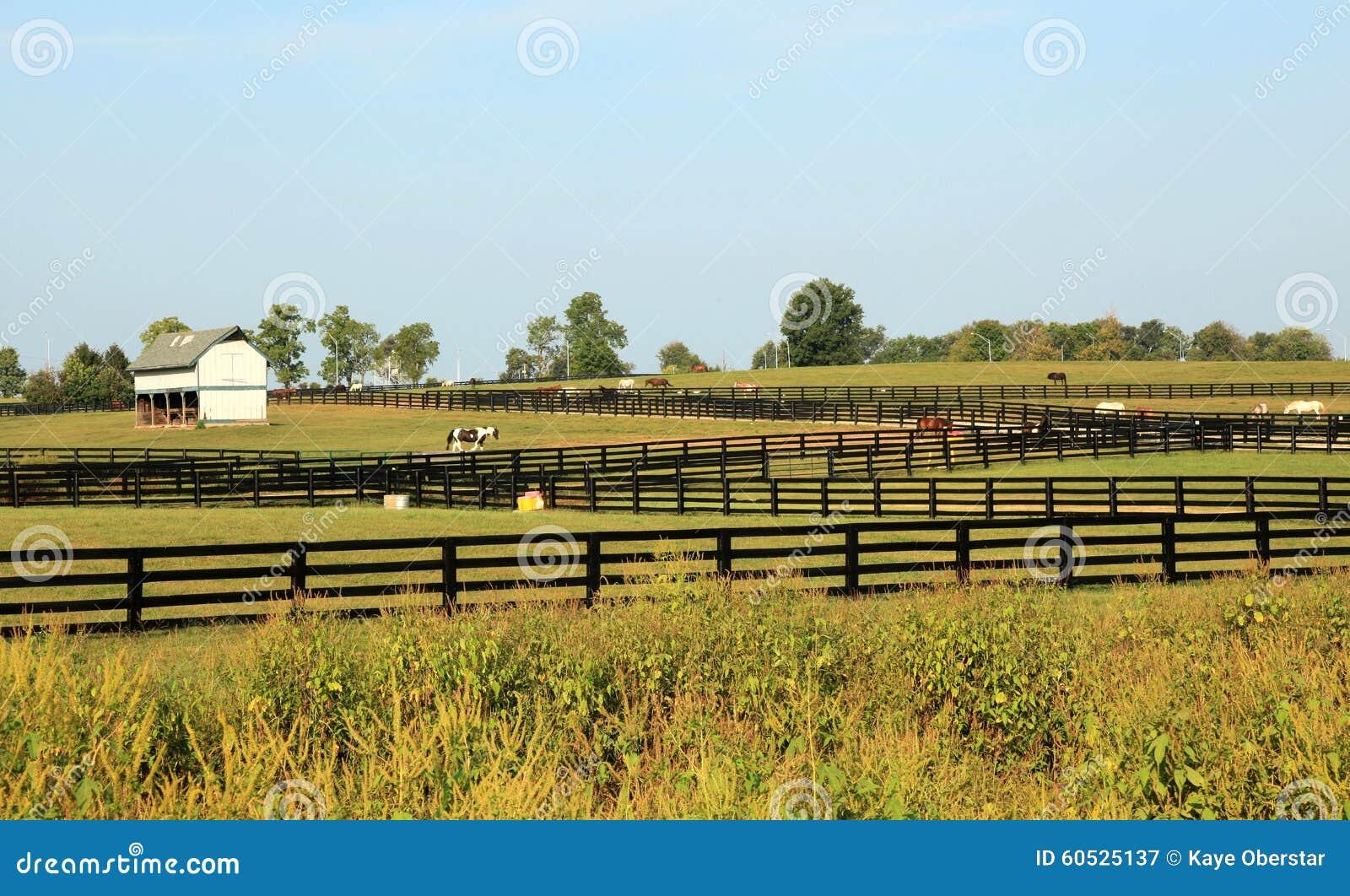kentucky horse park business plan
