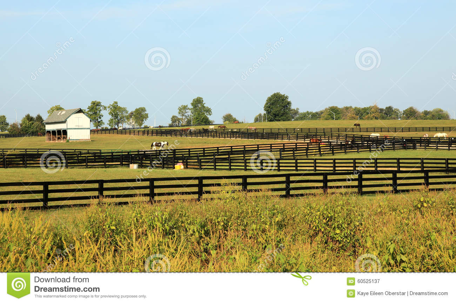 Kentucky Horse Park stock image  Image of bluegrass, region - 60525137
