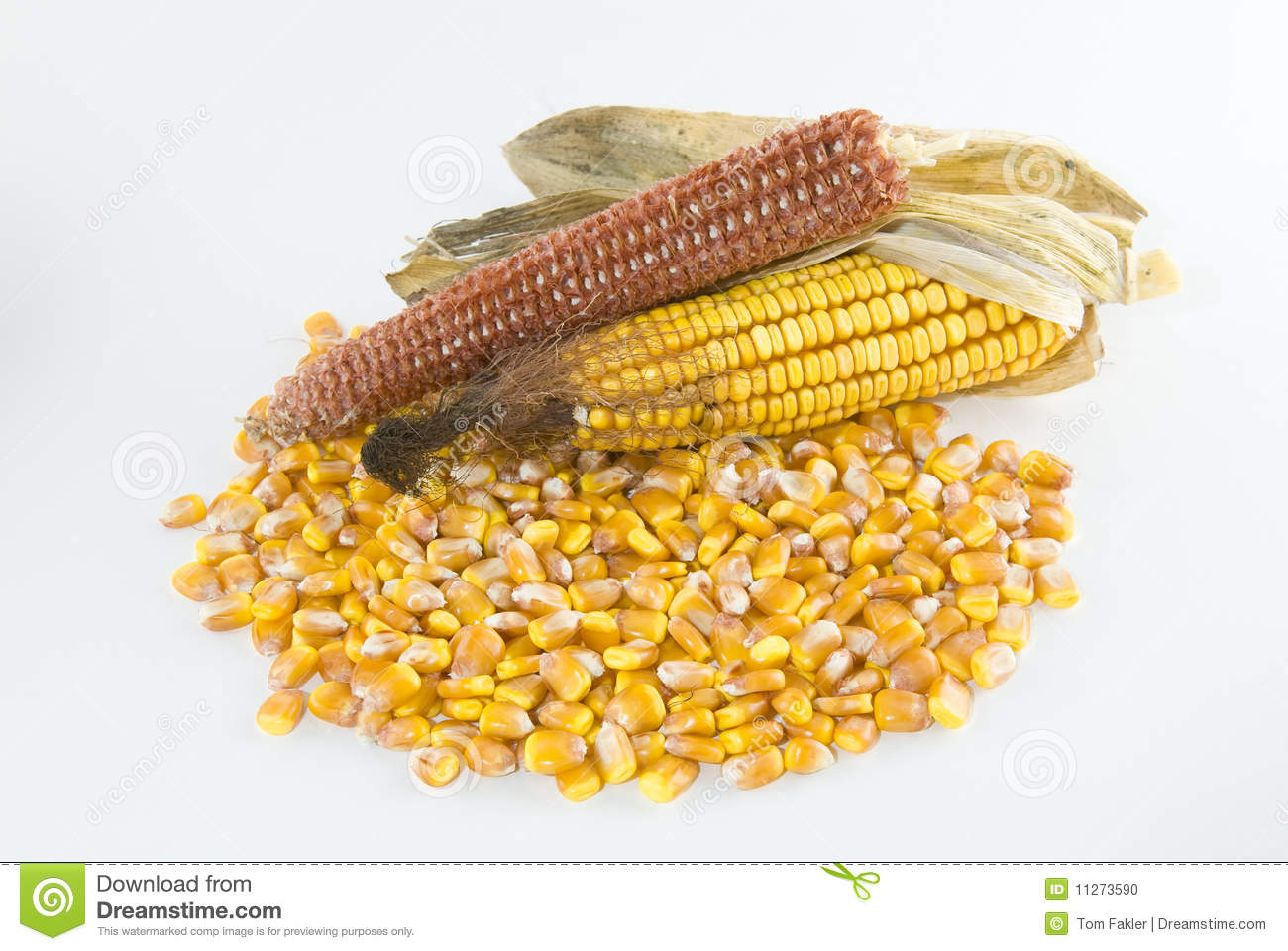 how many kernels on an ear of corn